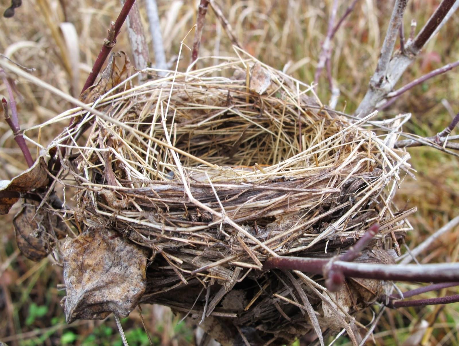Blue Jay Barrens: Bird Nests in the Field