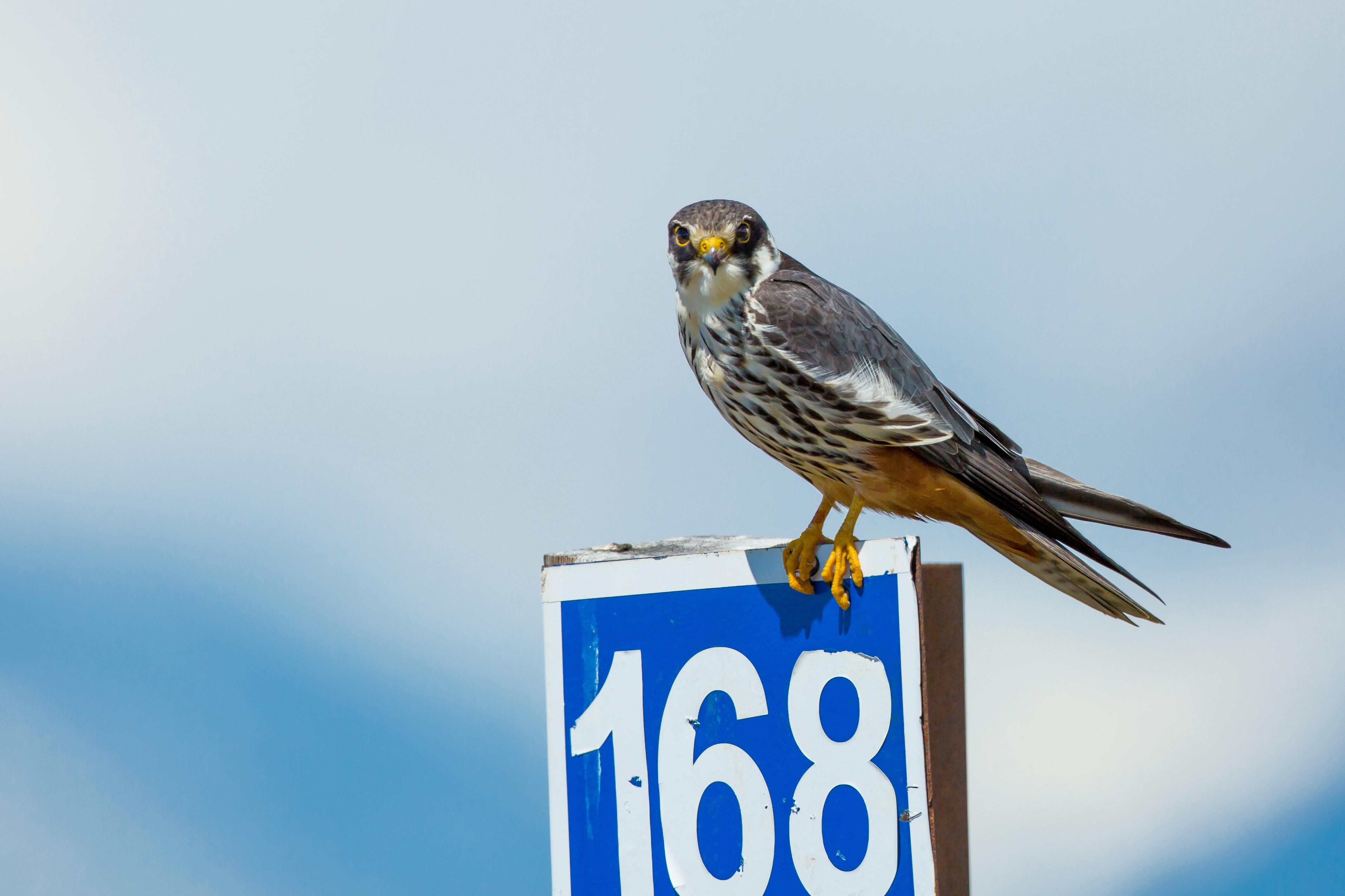 Bird on the Board, Animal, Bird, Board, Flight, HQ Photo
