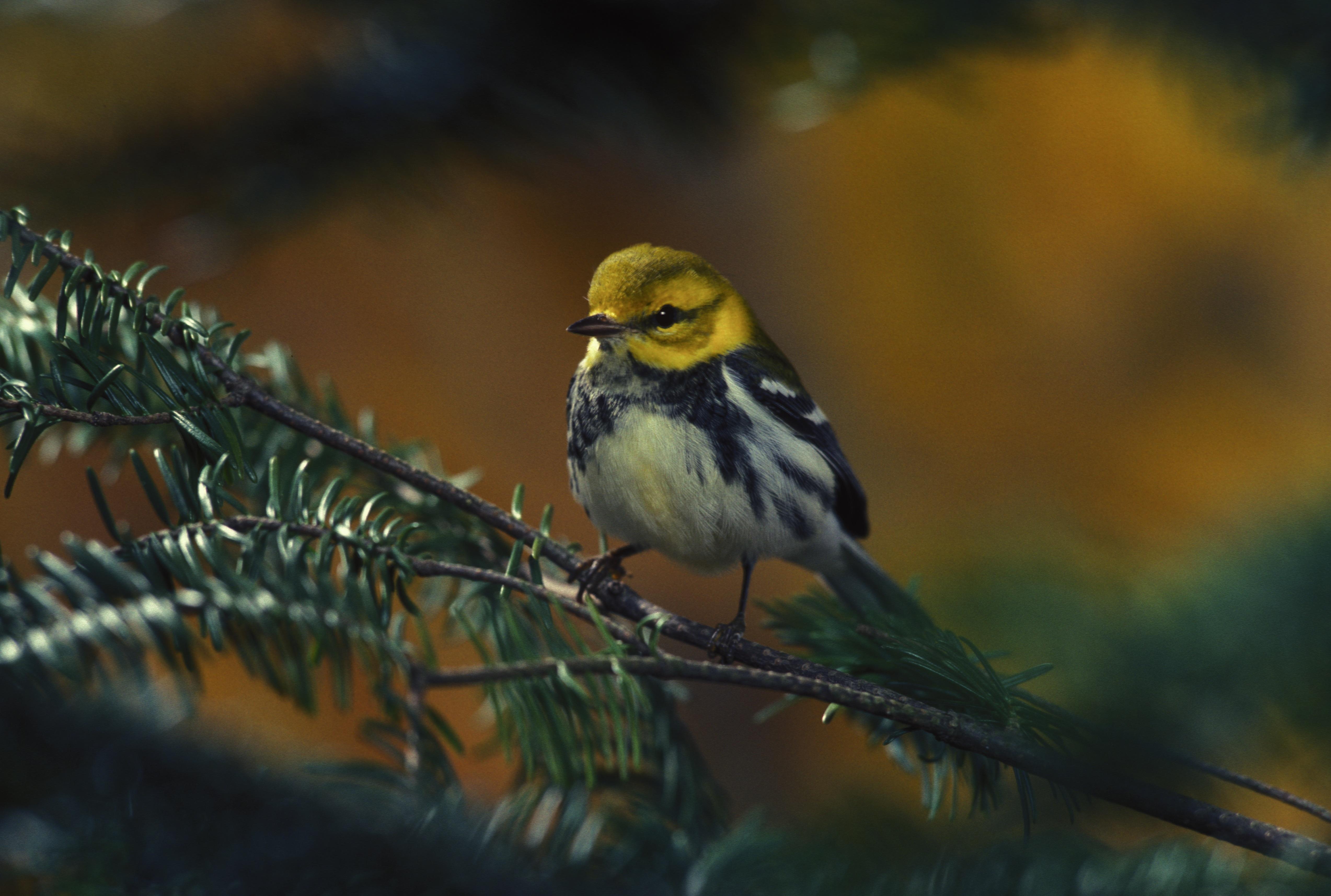 Bird on the branch photo