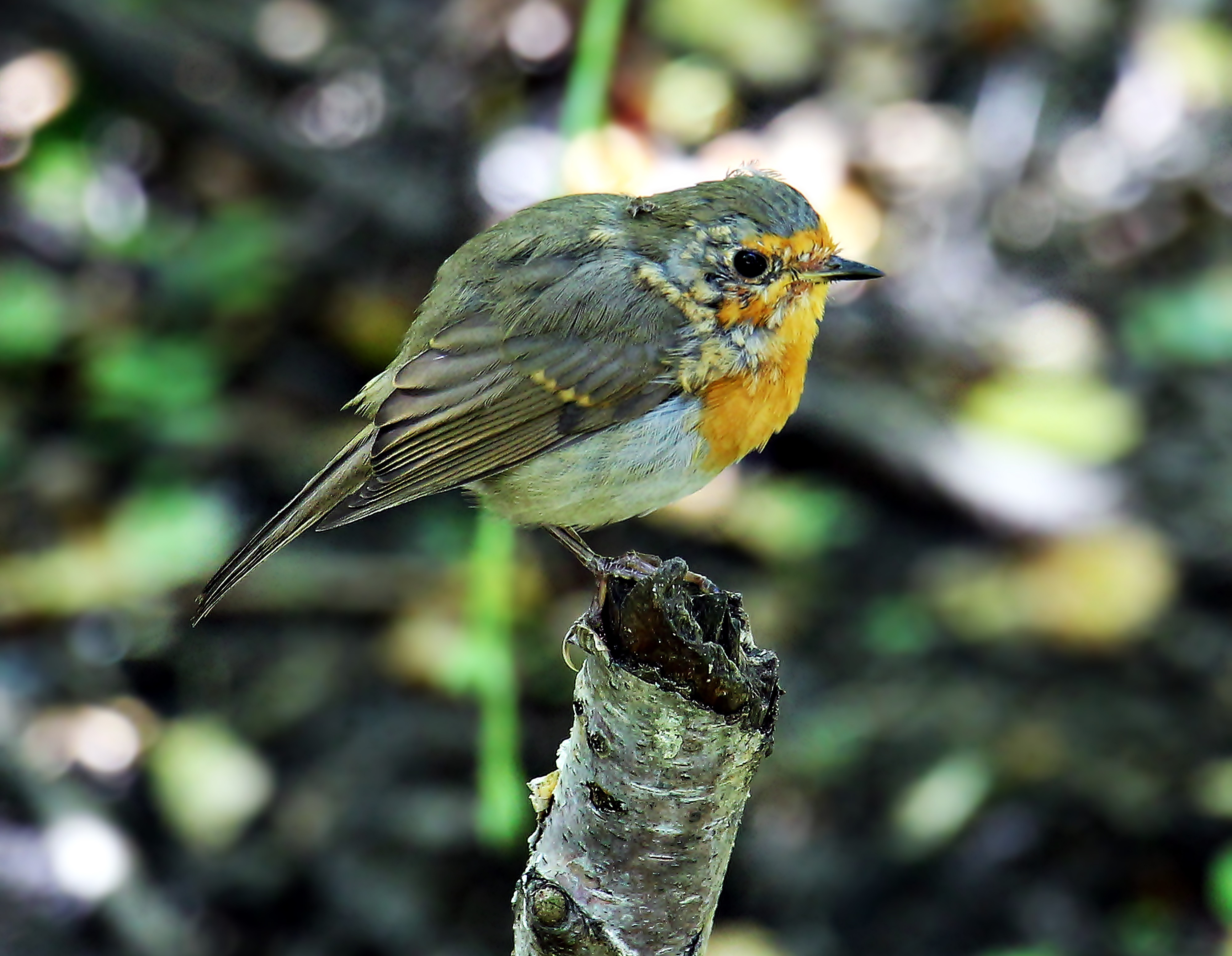 Bird on the broken branch photo