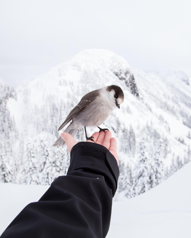 Bird on the hand, Activity, Bird, Brave, Fly, HQ Photo