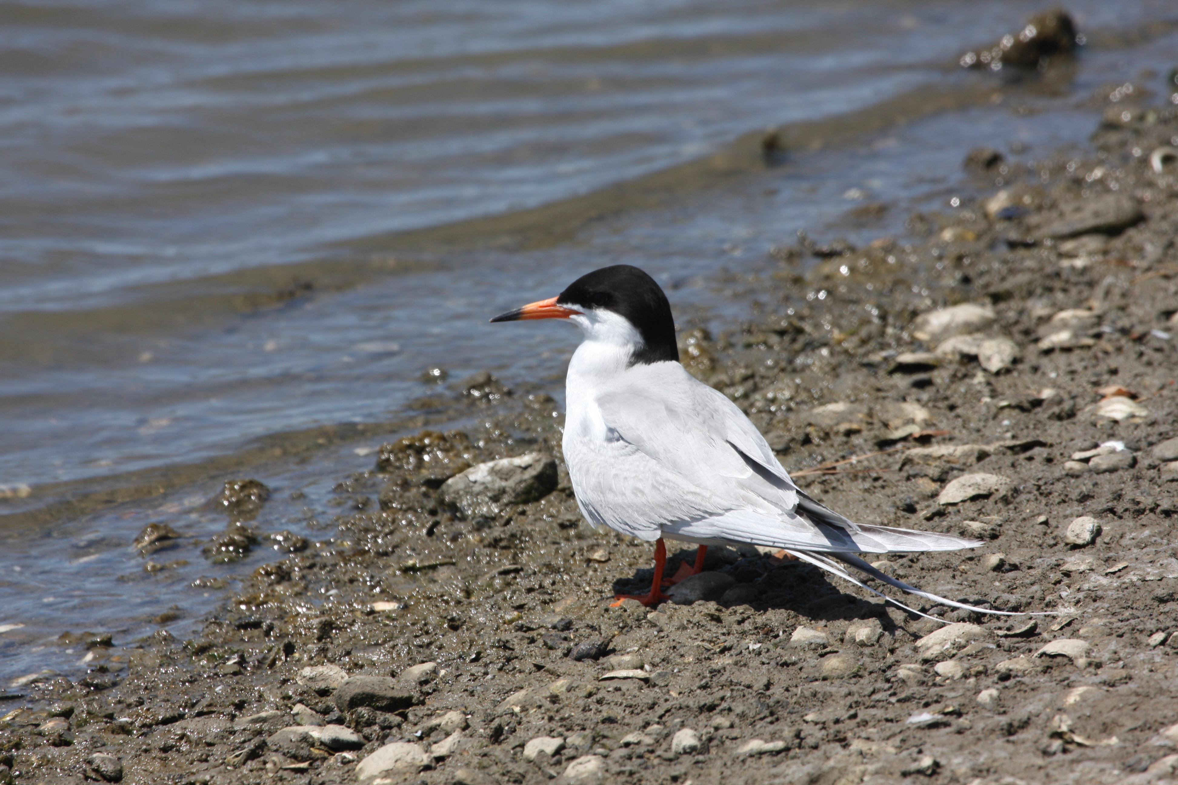 Bird on the shore photo