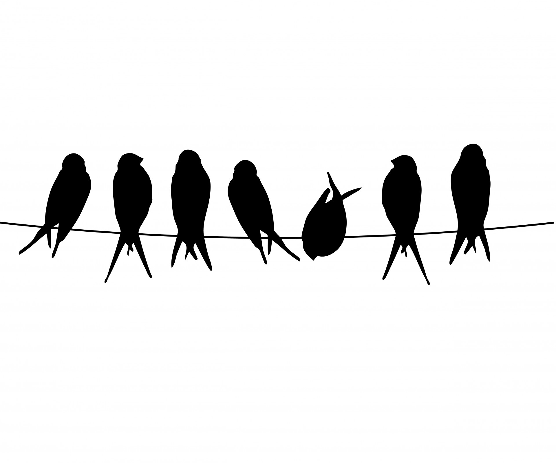 Birds On A Wire Free Stock Photo - Public Domain Pictures