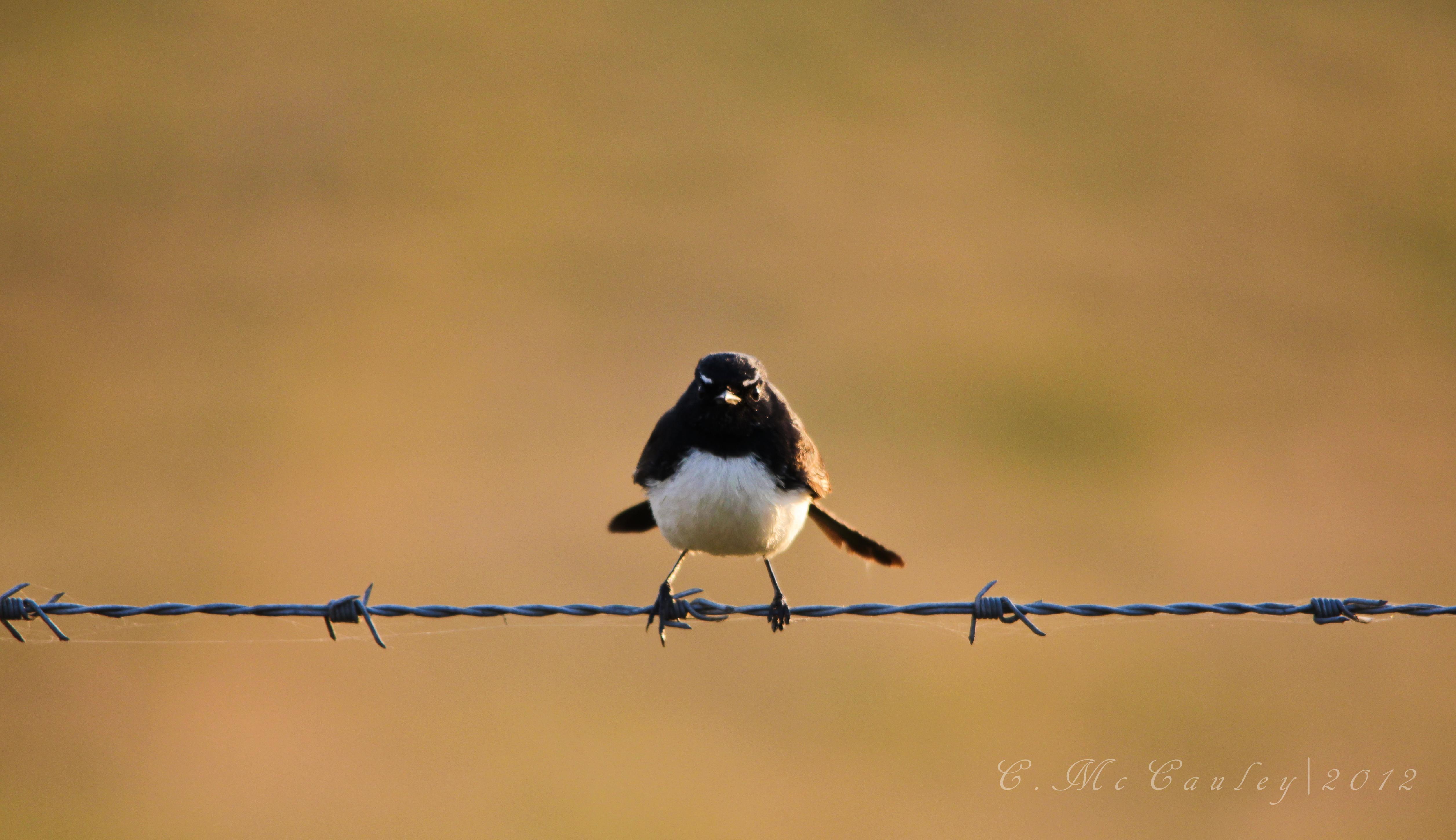 Day 247 – Bird on A Wire | cindymccauley