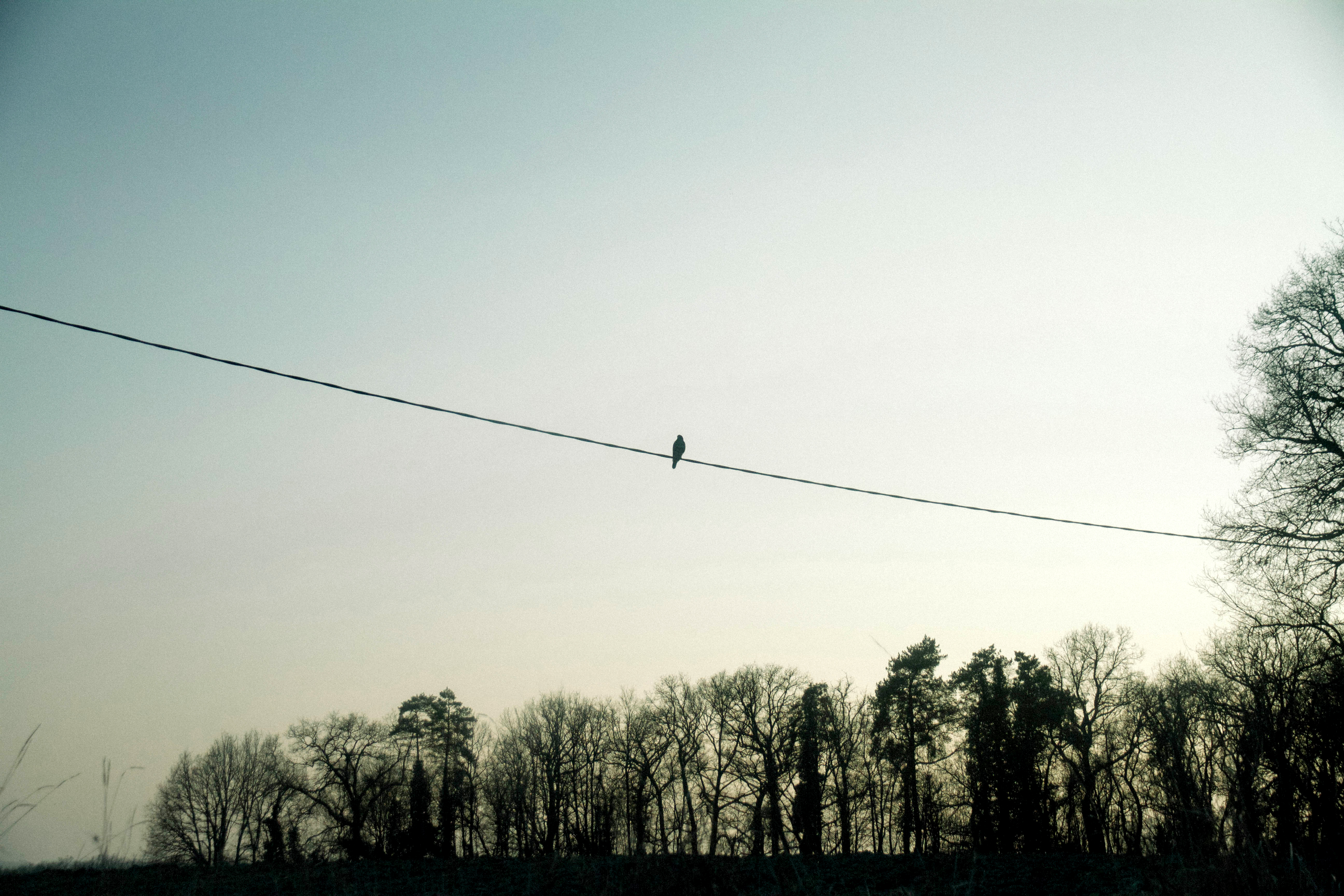 Bird On Wire, Tree, Wire, Plants, Electric, HQ Photo