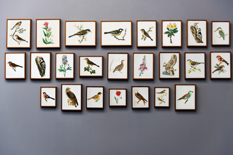 Bird painting wall photo
