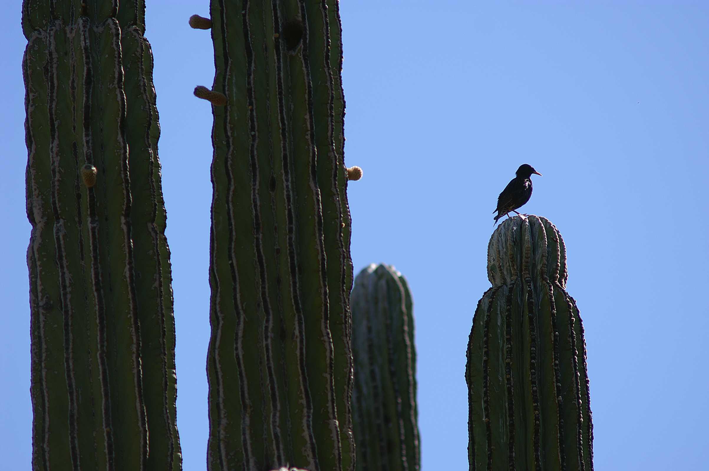 Bird sitting on cactus, Animal, Bird, Cactus, Columns, HQ Photo