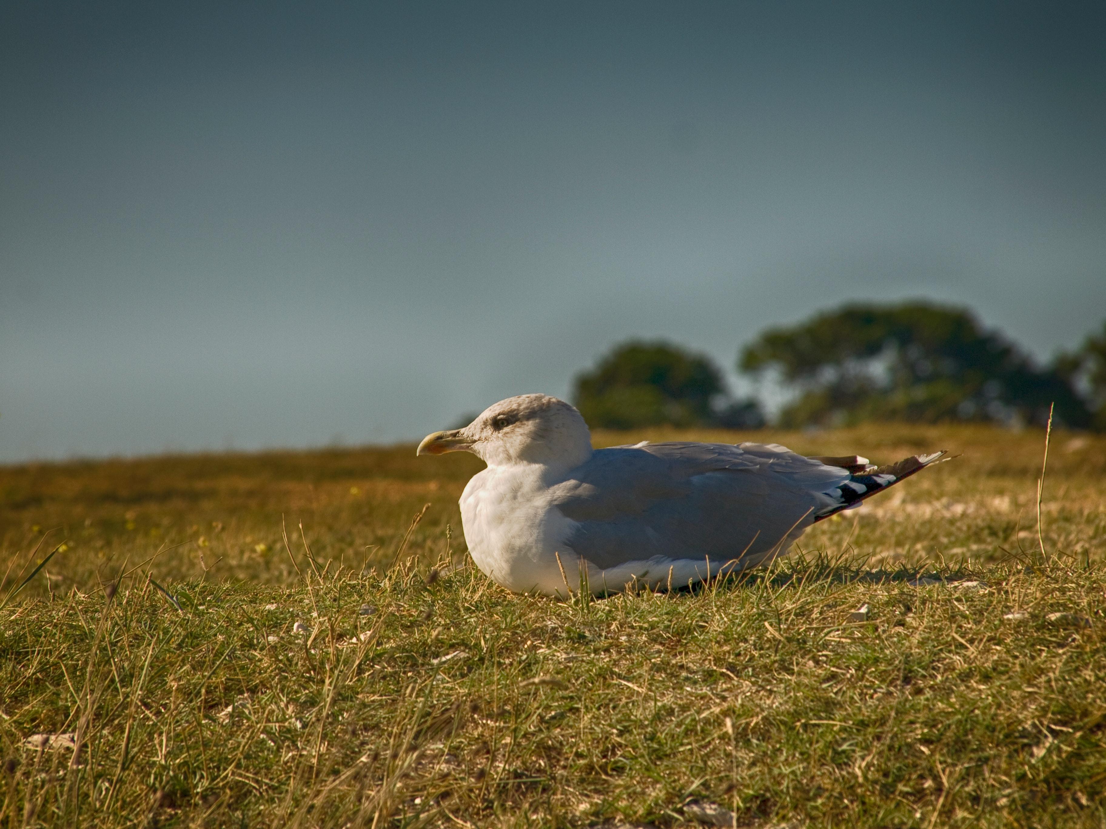 Bird sitting on grassy ground photo