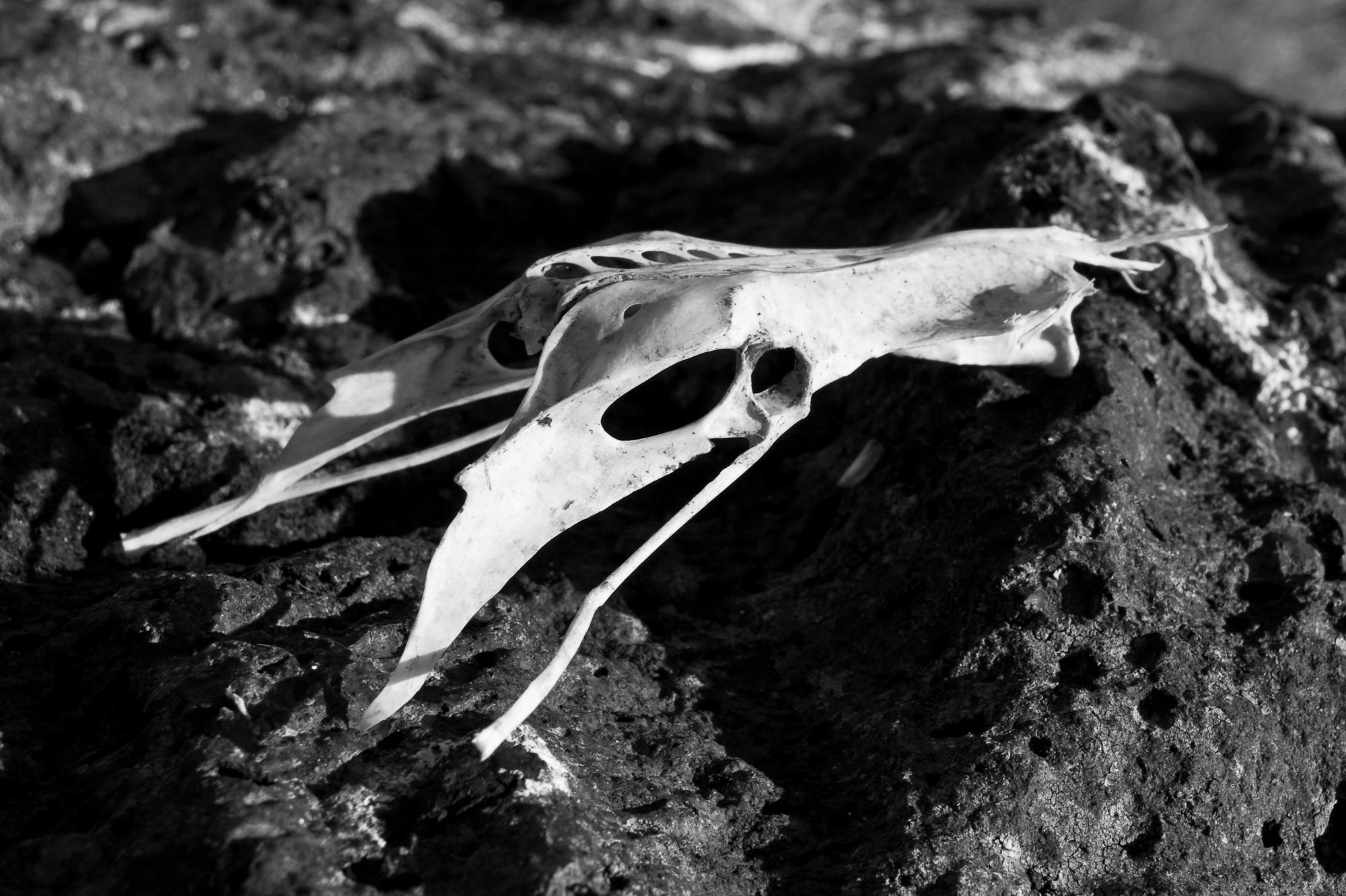 Bird skull photo
