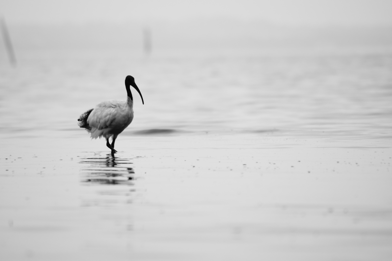 Bird walking on the beach photo