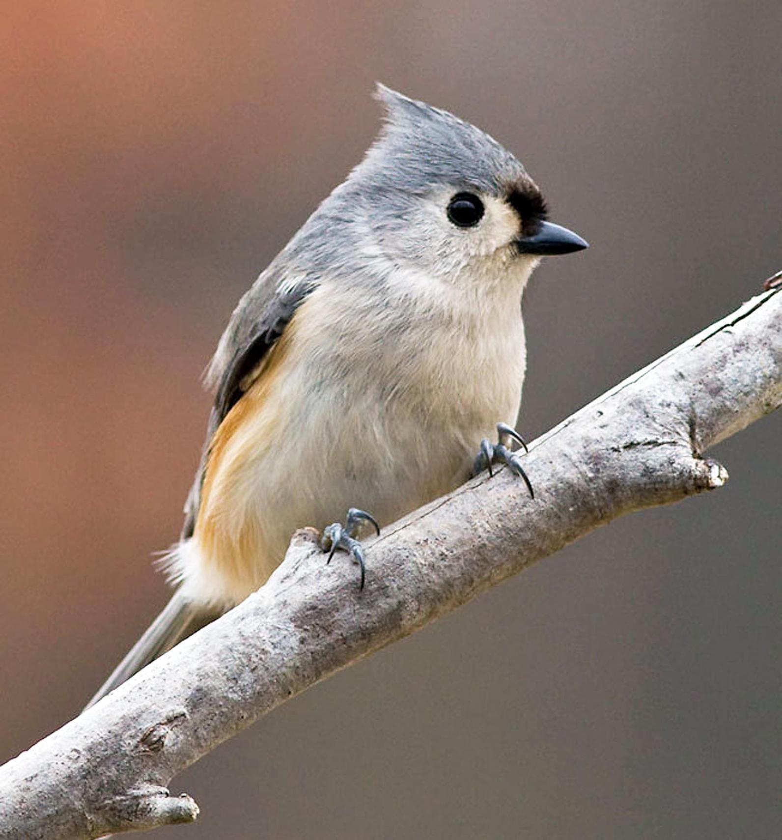 Bird-feeding Basics | Audubon Texas
