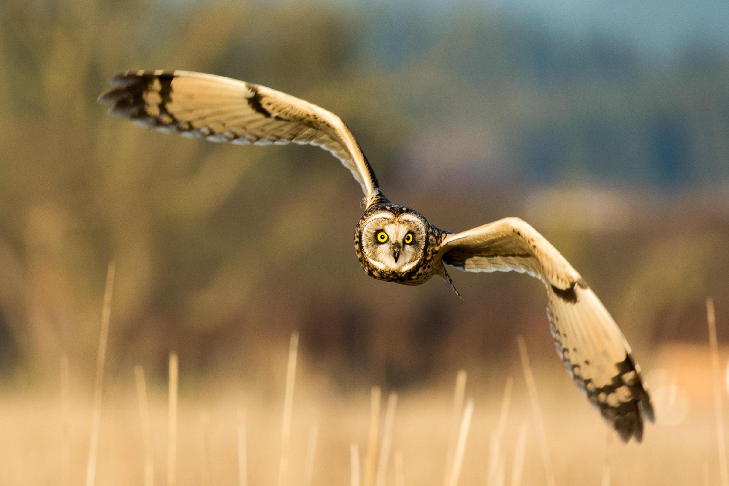 Birds | Audubon South Carolina