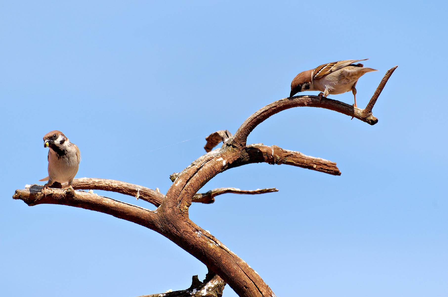 Birds photo