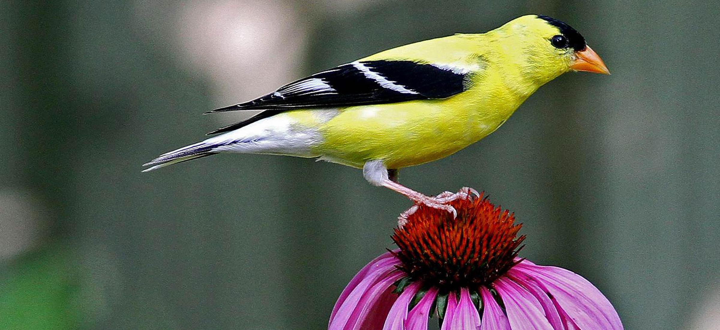 Plants for Birds | Audubon Connecticut