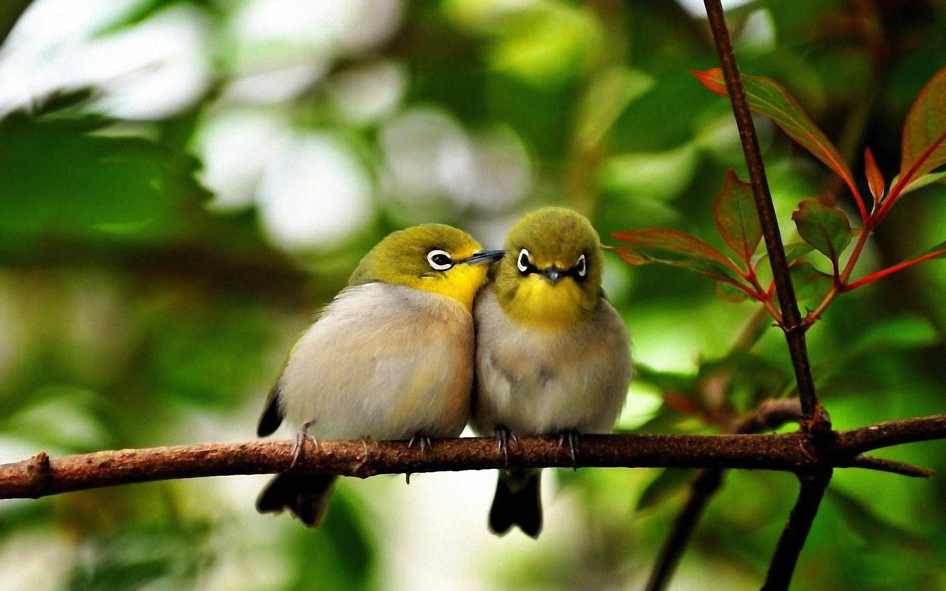 2048 Cute Birds