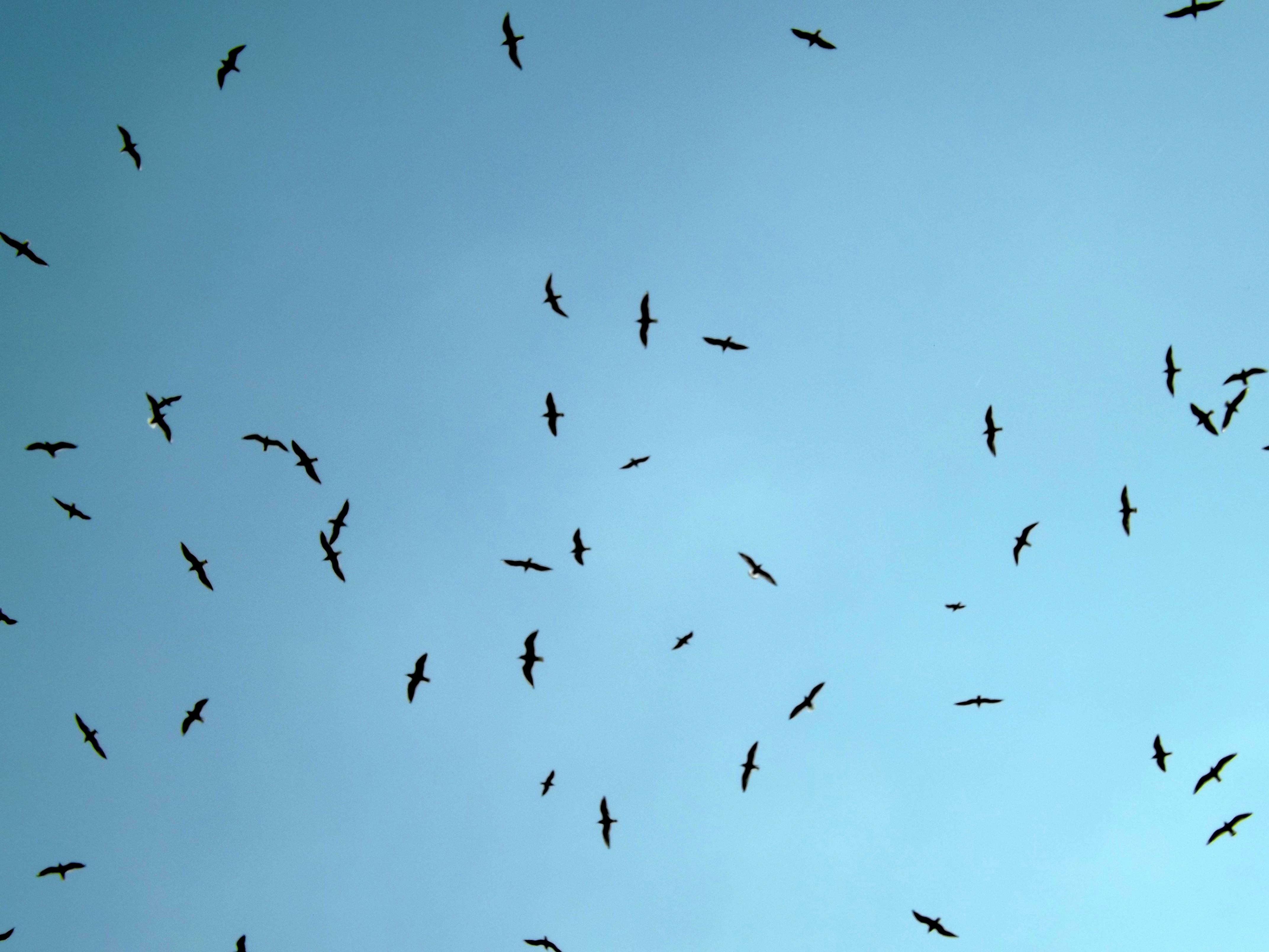 Birds, Blue, Fly, Flying, Sky, HQ Photo