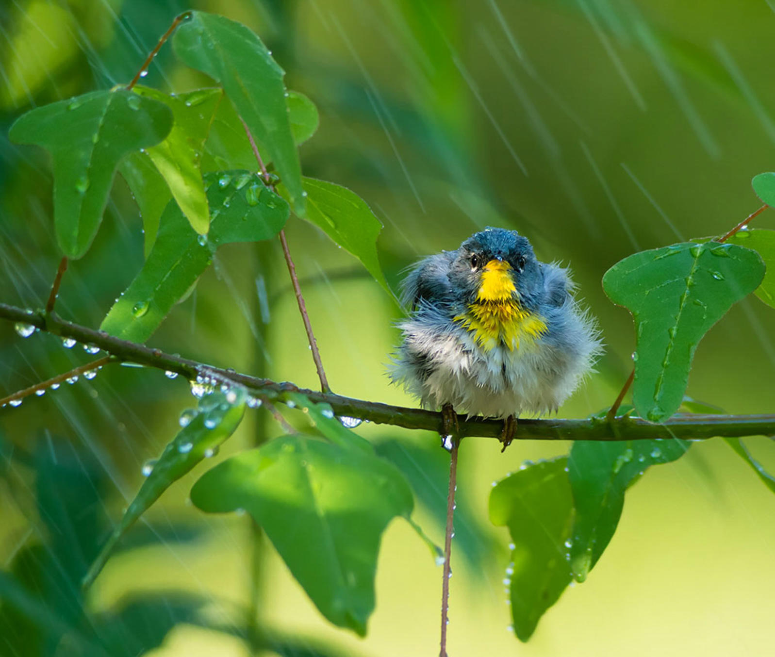 Why Do Birds Avoid Flying in the Rain? | Audubon