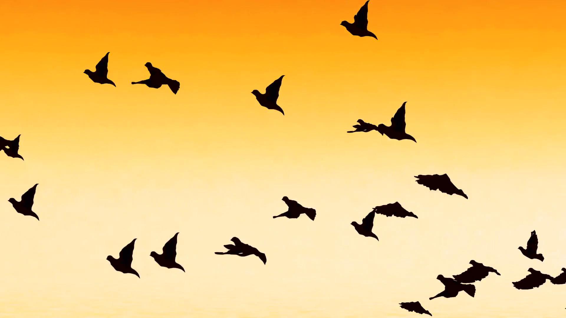 Flying birds photo