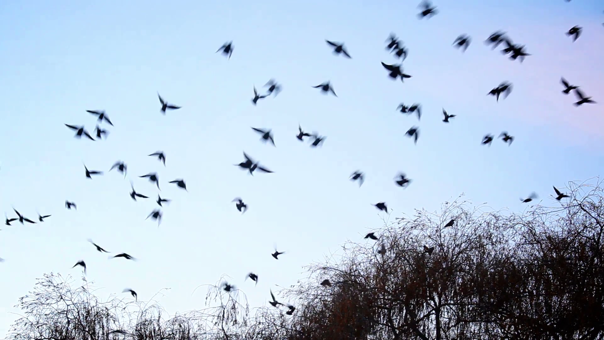 Birds flying away from the tree Stock Video Footage - Videoblocks