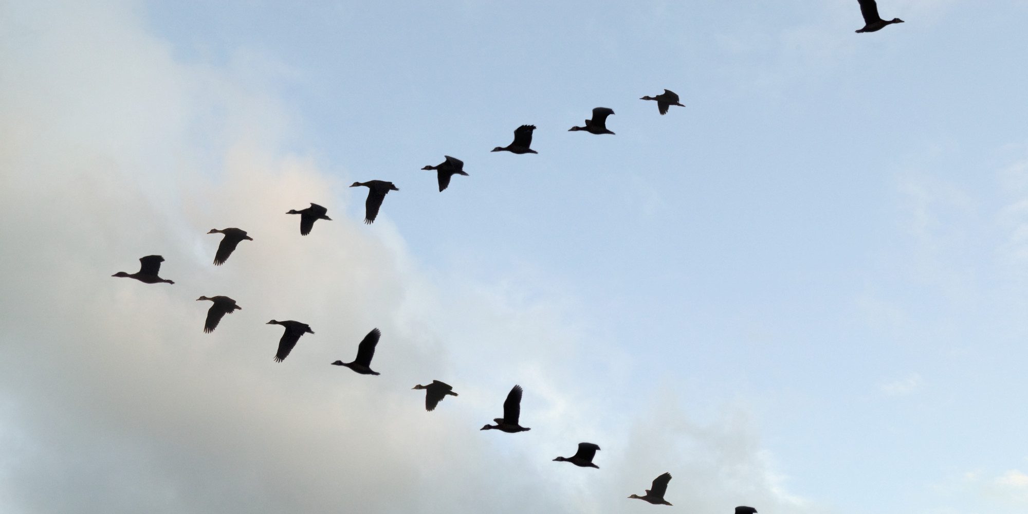 Here's Why Birds Fly In A 'V' Formation | HuffPost
