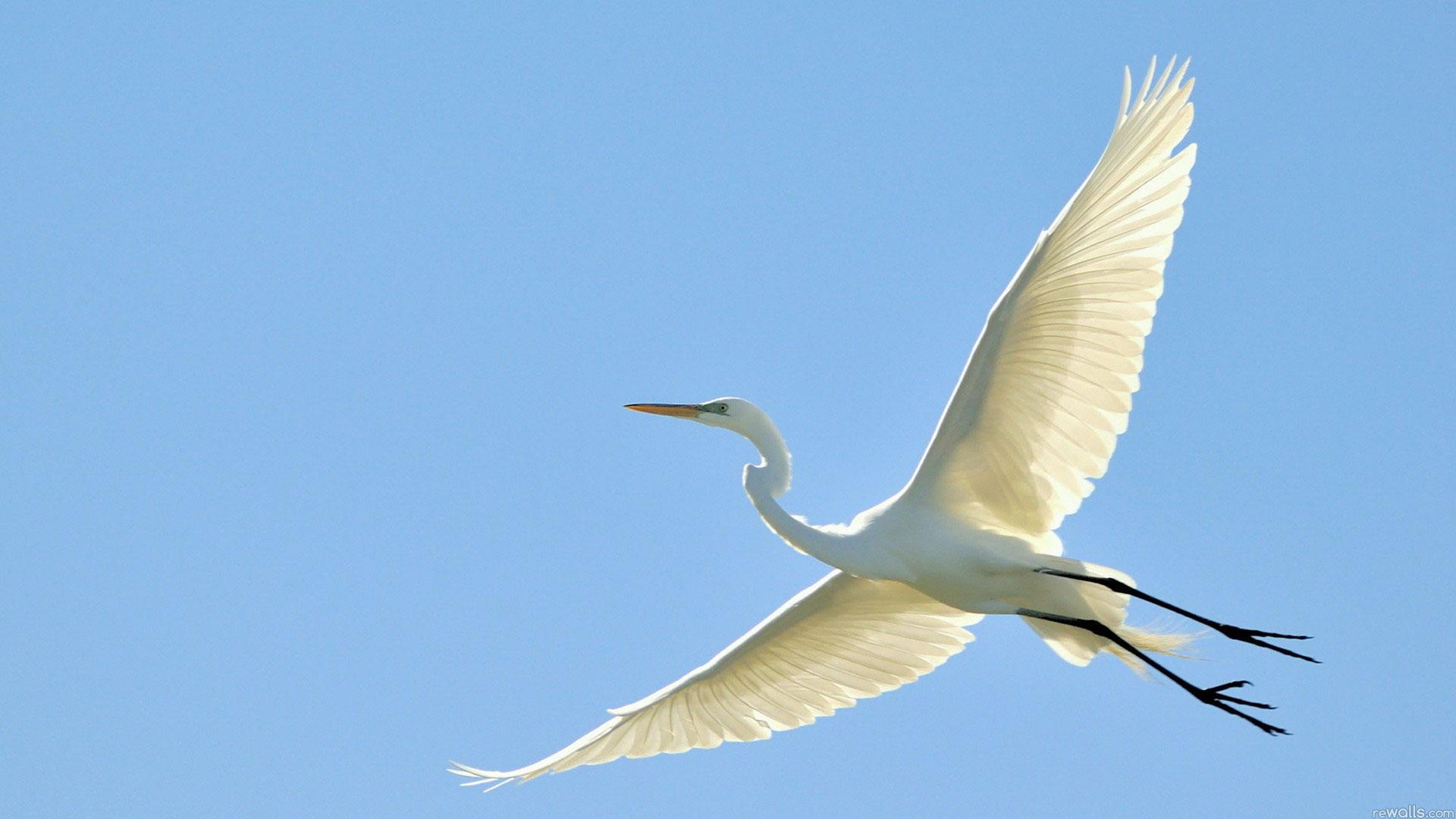 Birds flying photo