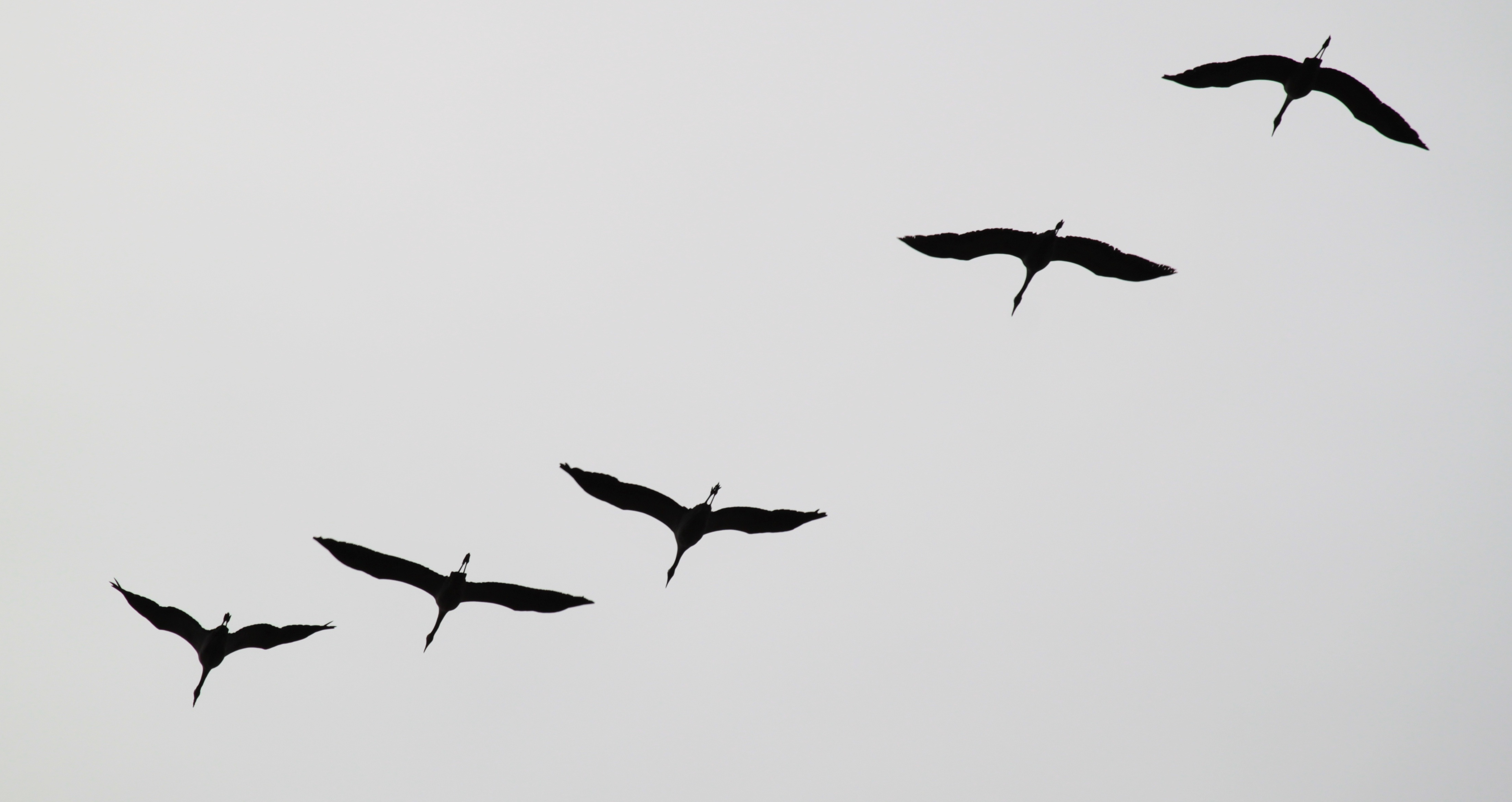 free photo birds flying sky nature group free download jooinn