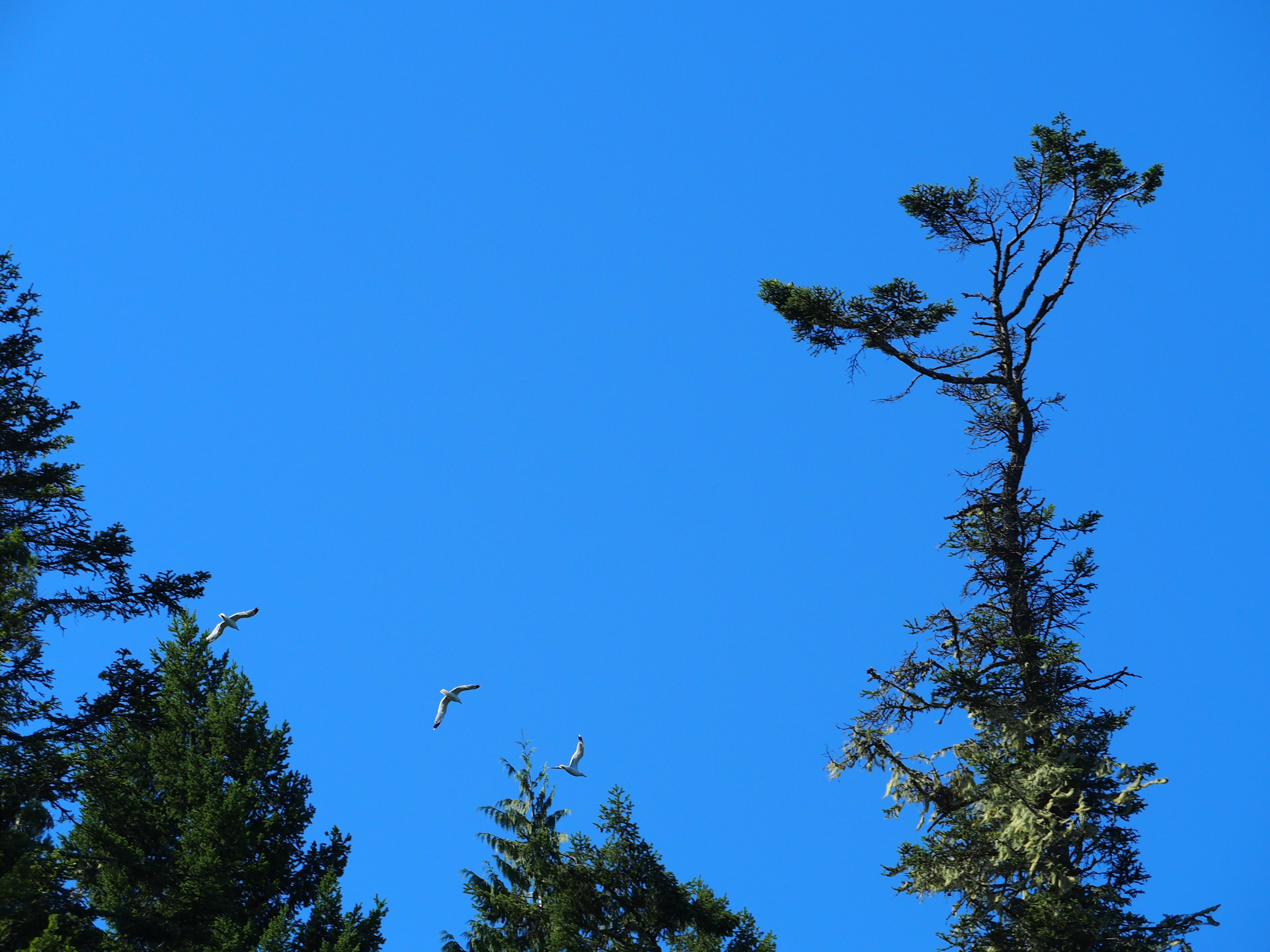 Birds flying in the sky, Animal, Animals, Bird, Birds, HQ Photo
