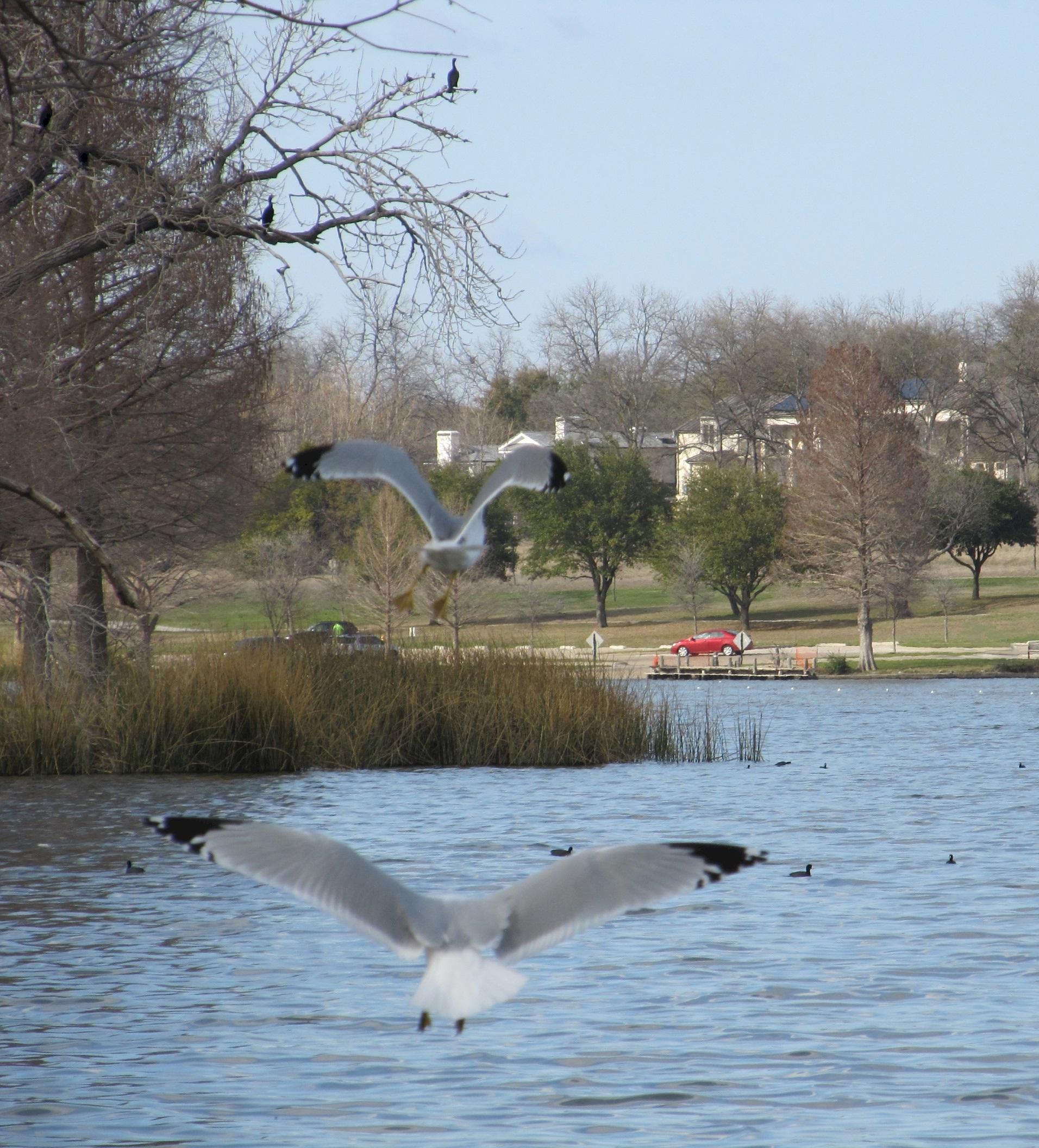 Birds flying on the lake photo