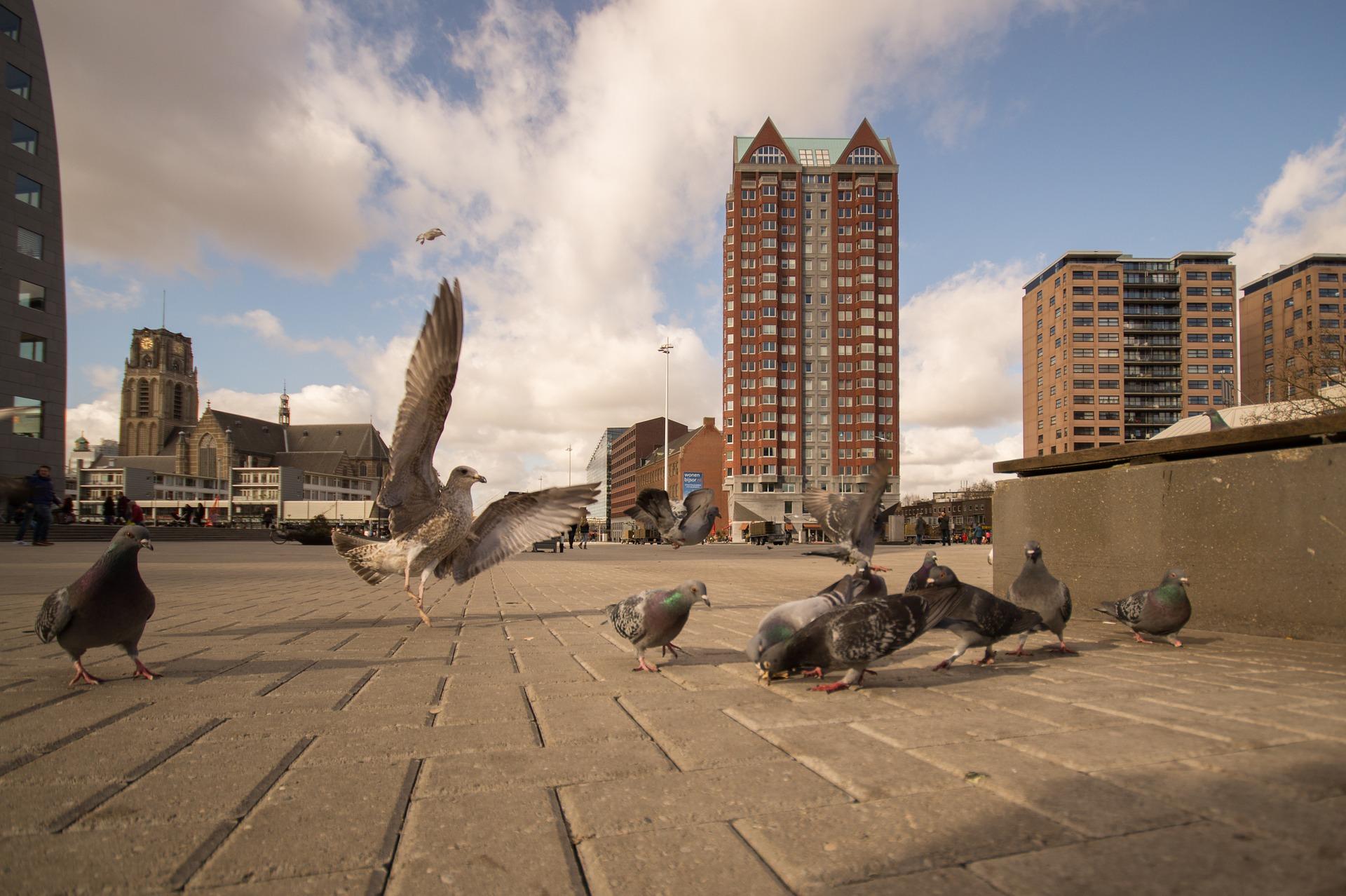 Birds in the city photo