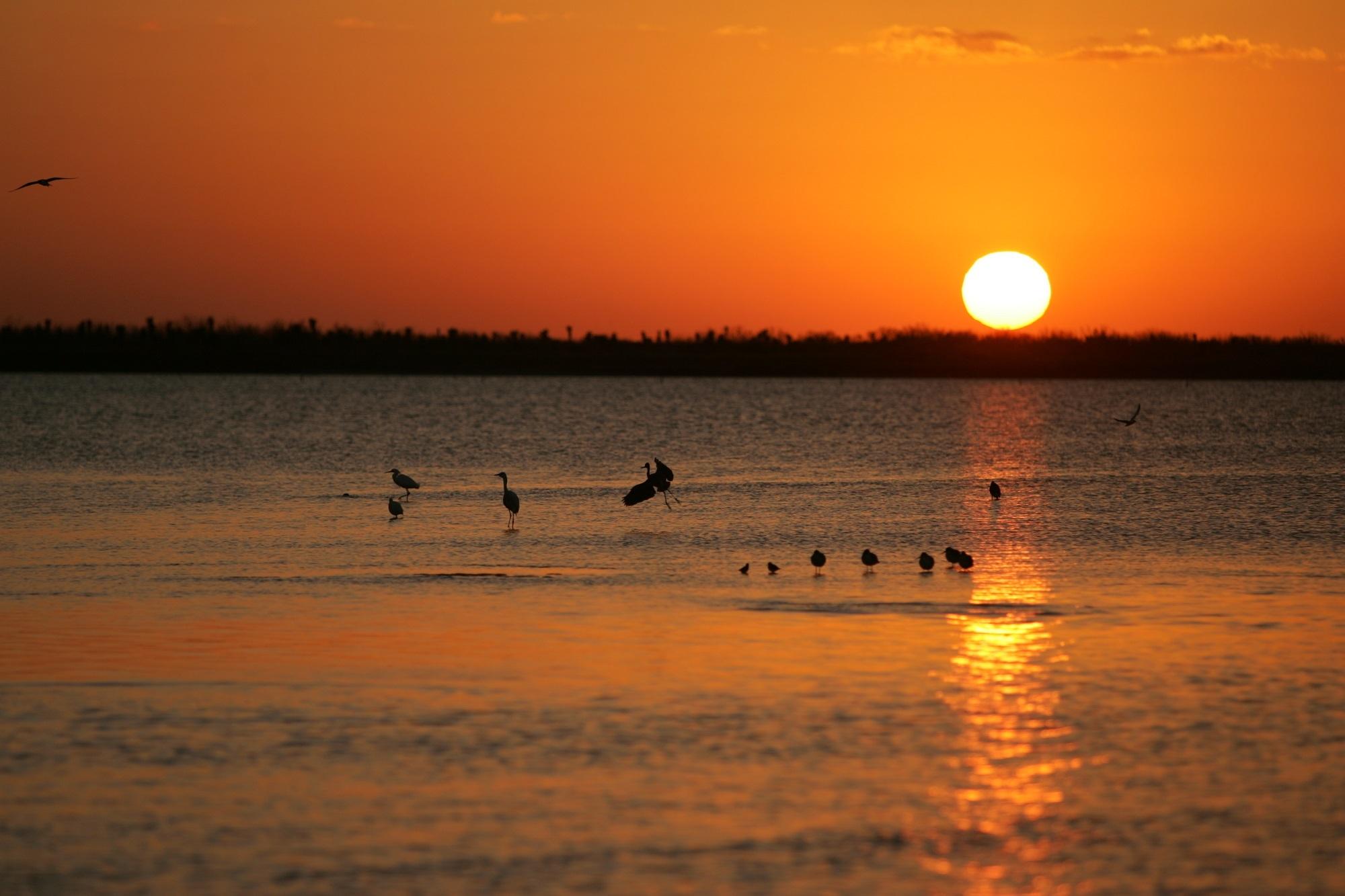 Birds in the river photo