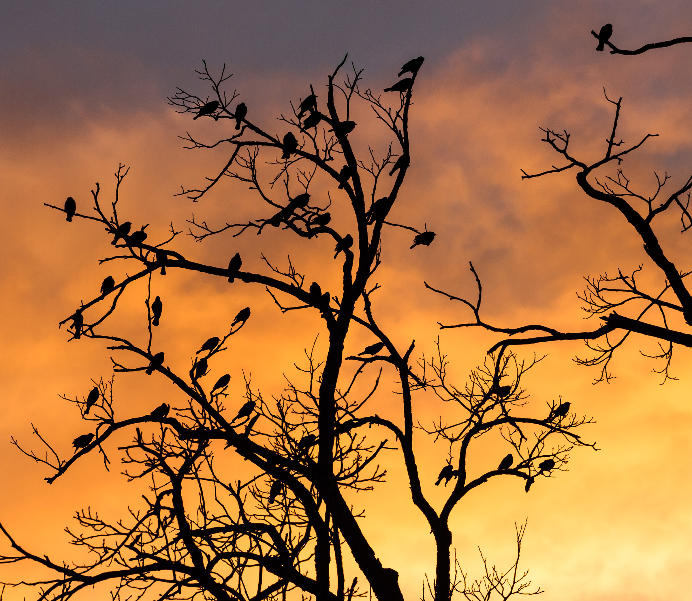 File:Silhouetted birds in a tree (7515037378).jpg - Wikimedia Commons