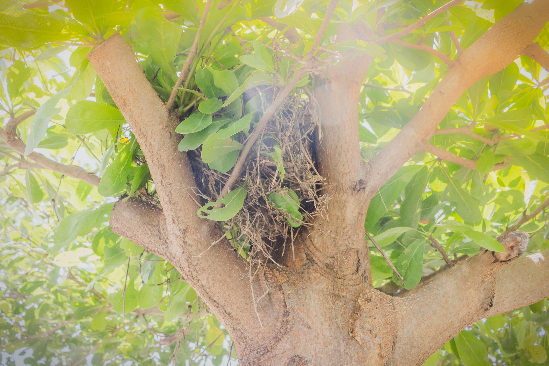 Birds nest on the tree photo