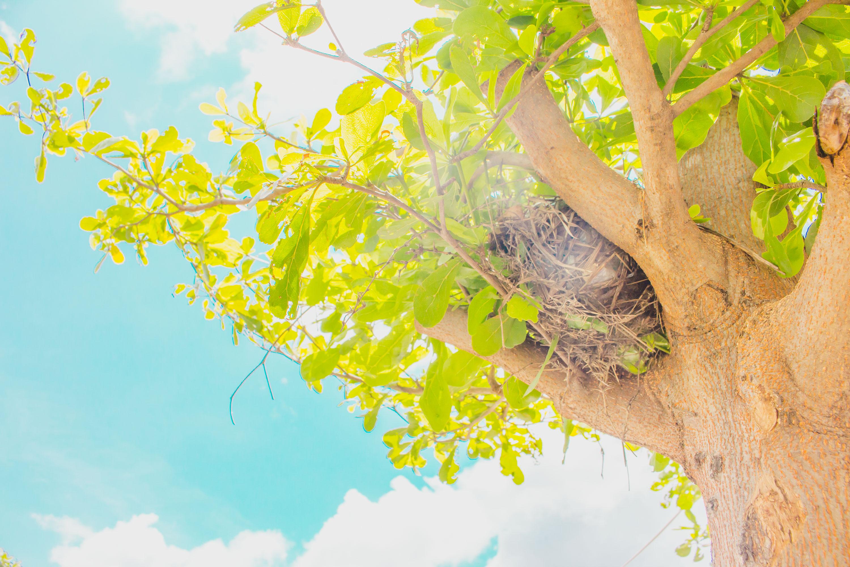 Birds nest, Above, Animal, Bird, Branch, HQ Photo