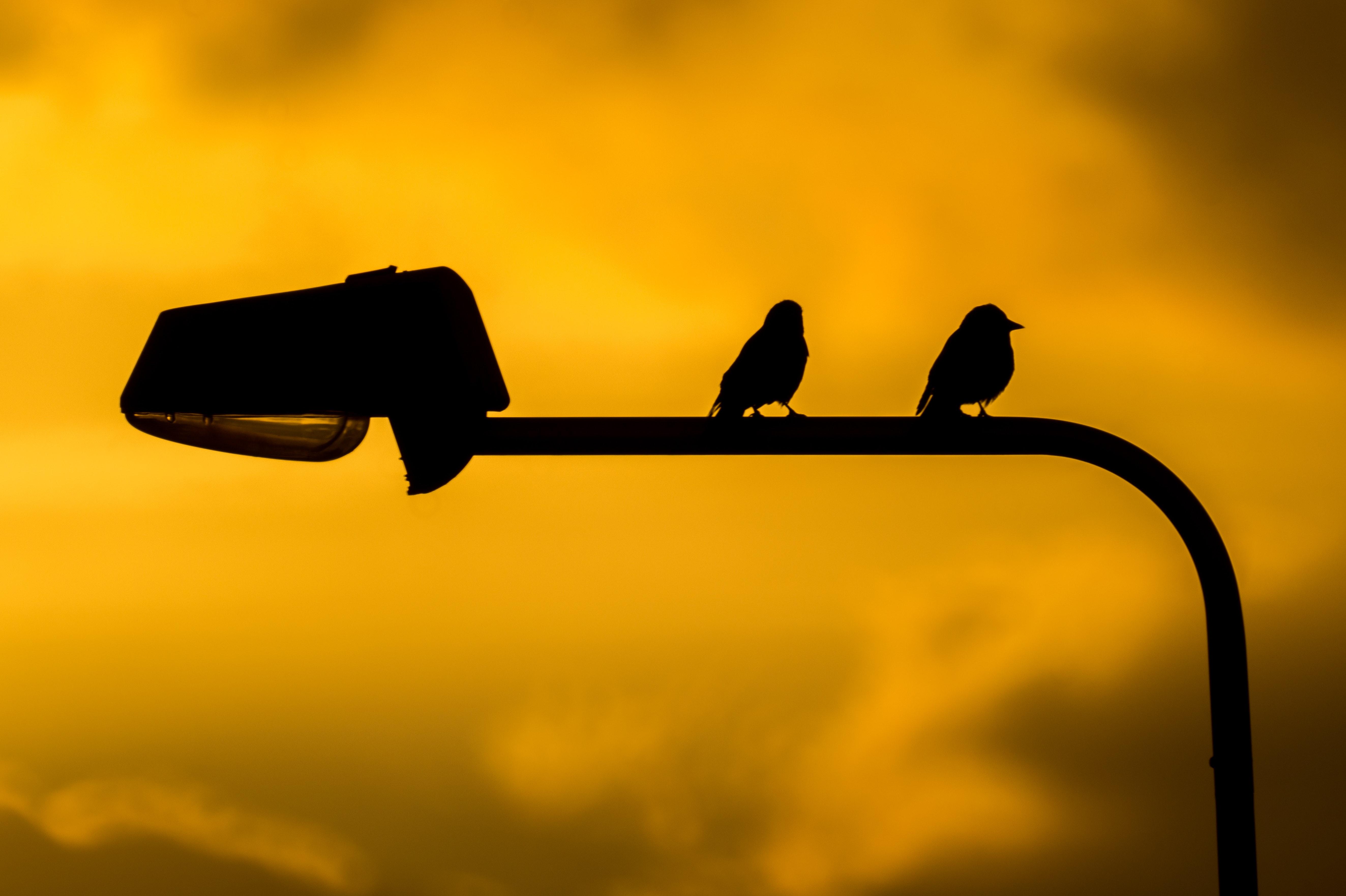 Birds on Street Lamp, Sunset, Sunshine, Twilight, Yellow, HQ Photo