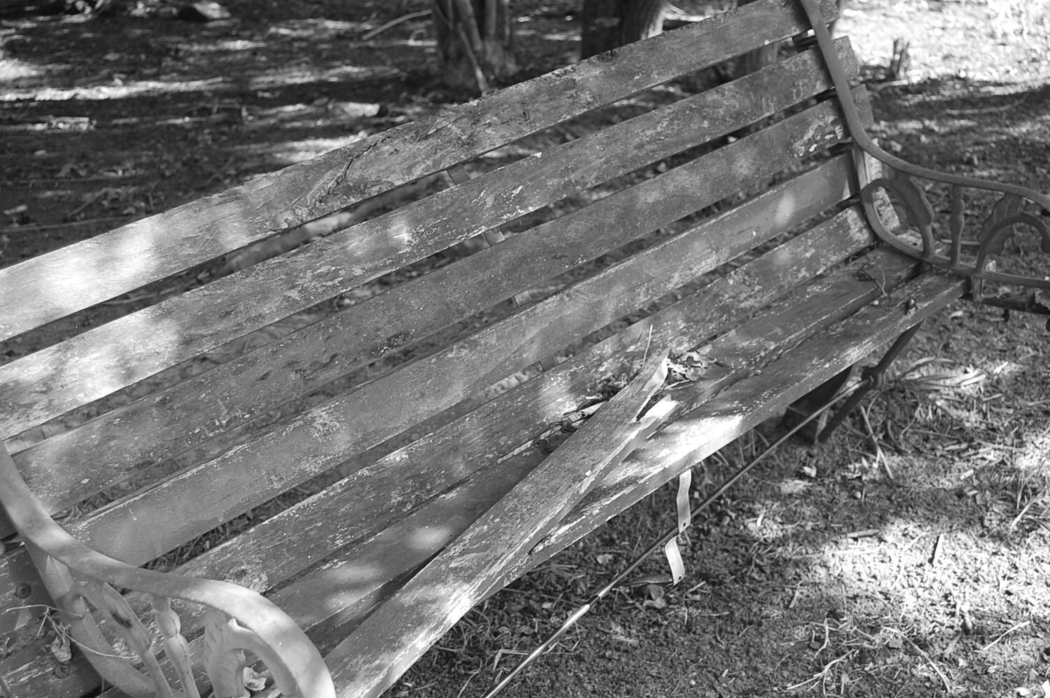 Black & white bench photo