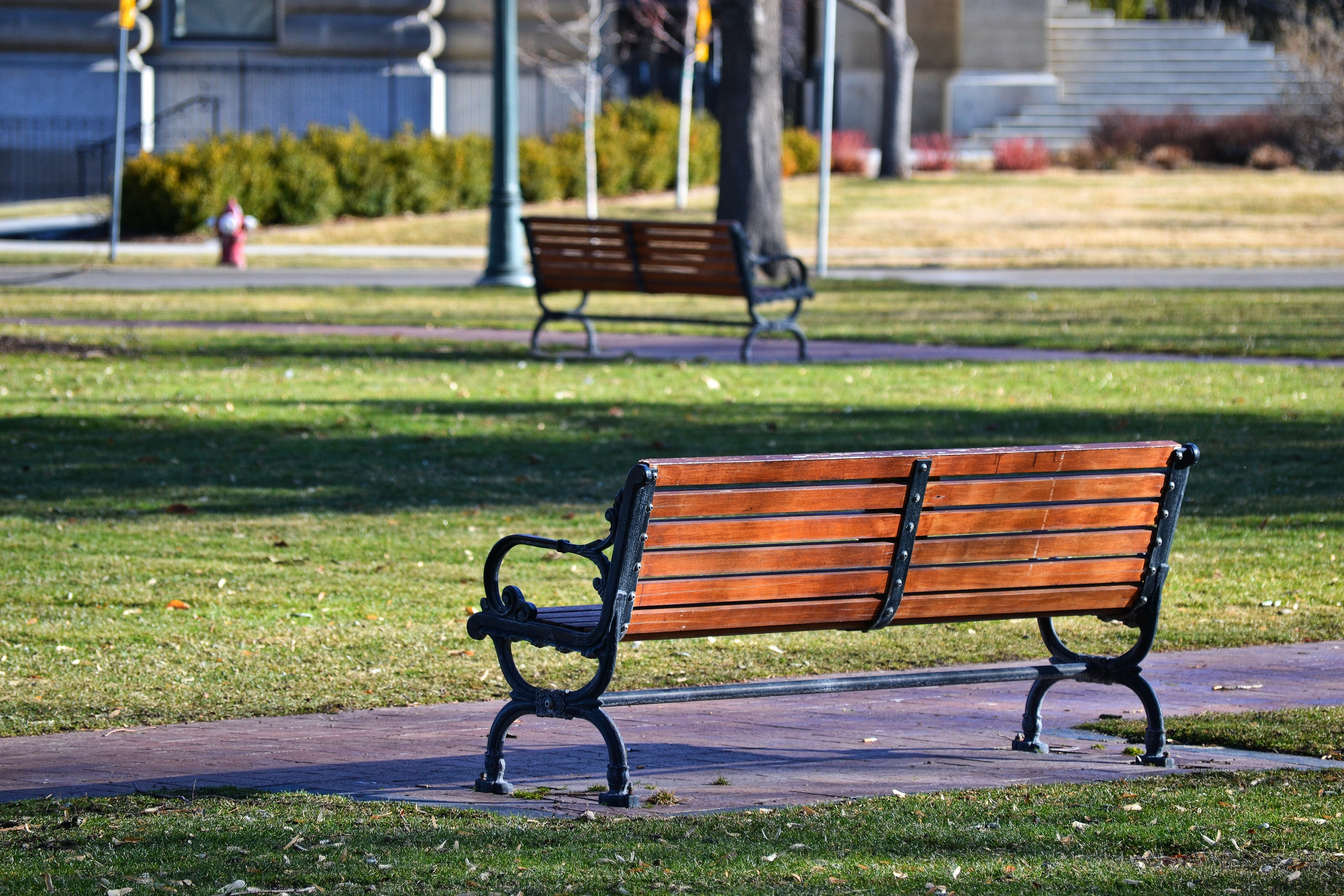 Black and Brown Bench Near Grass Field, Benches, Lawn, Plants, Pavement, HQ Photo