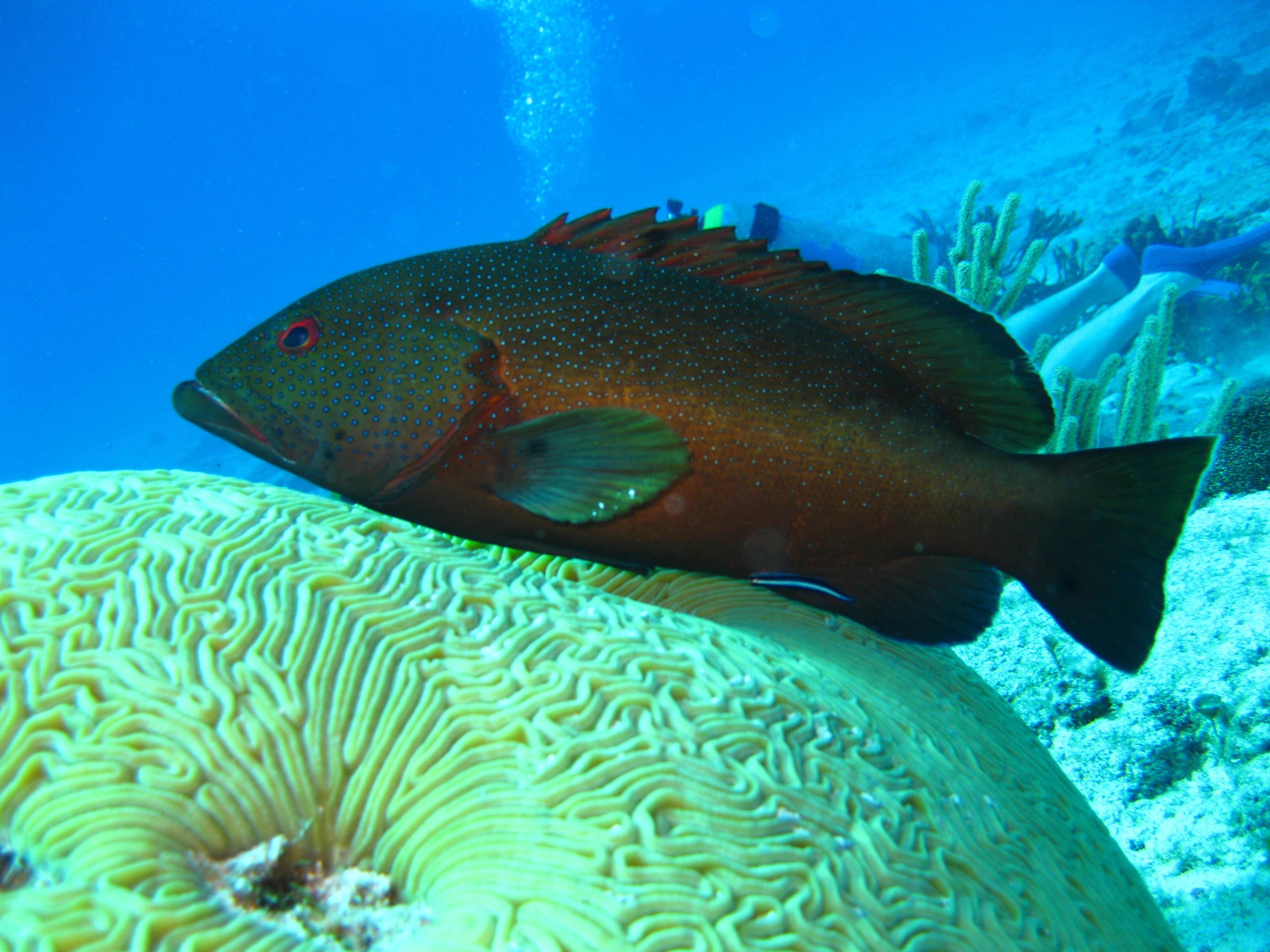 Black and grey fish underwater photo