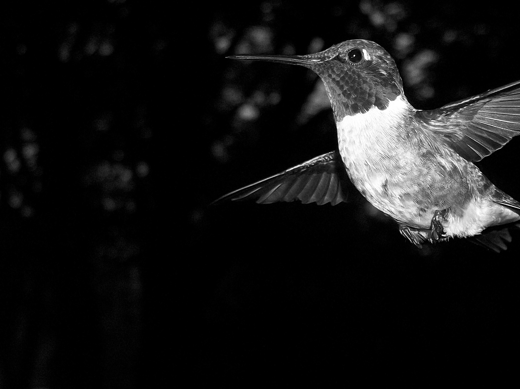 Black and white bord photo