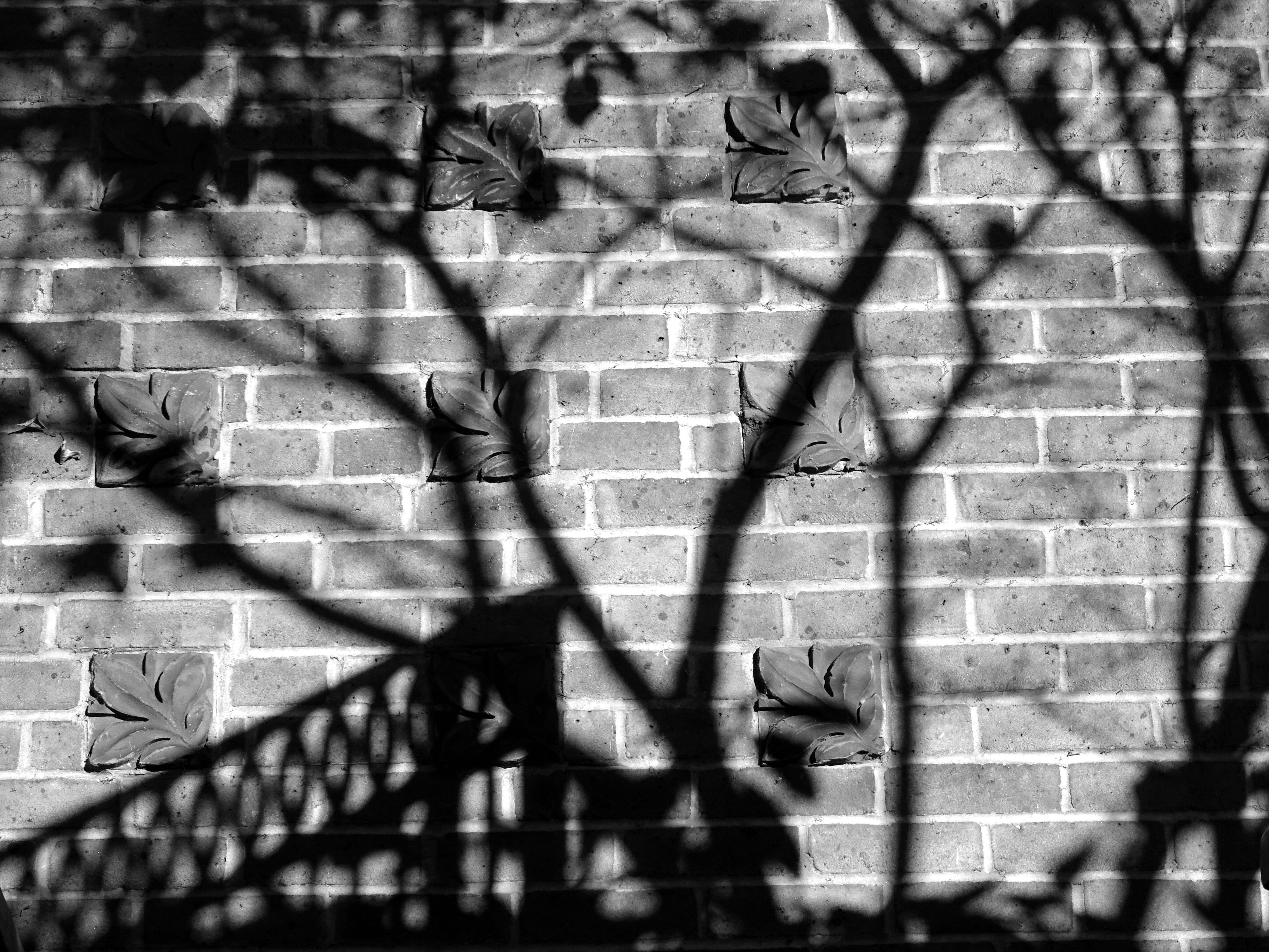 Black and White Photo of Shadows on the Wall, Abstract, Architecture, Black-and-white, Bricks, HQ Photo
