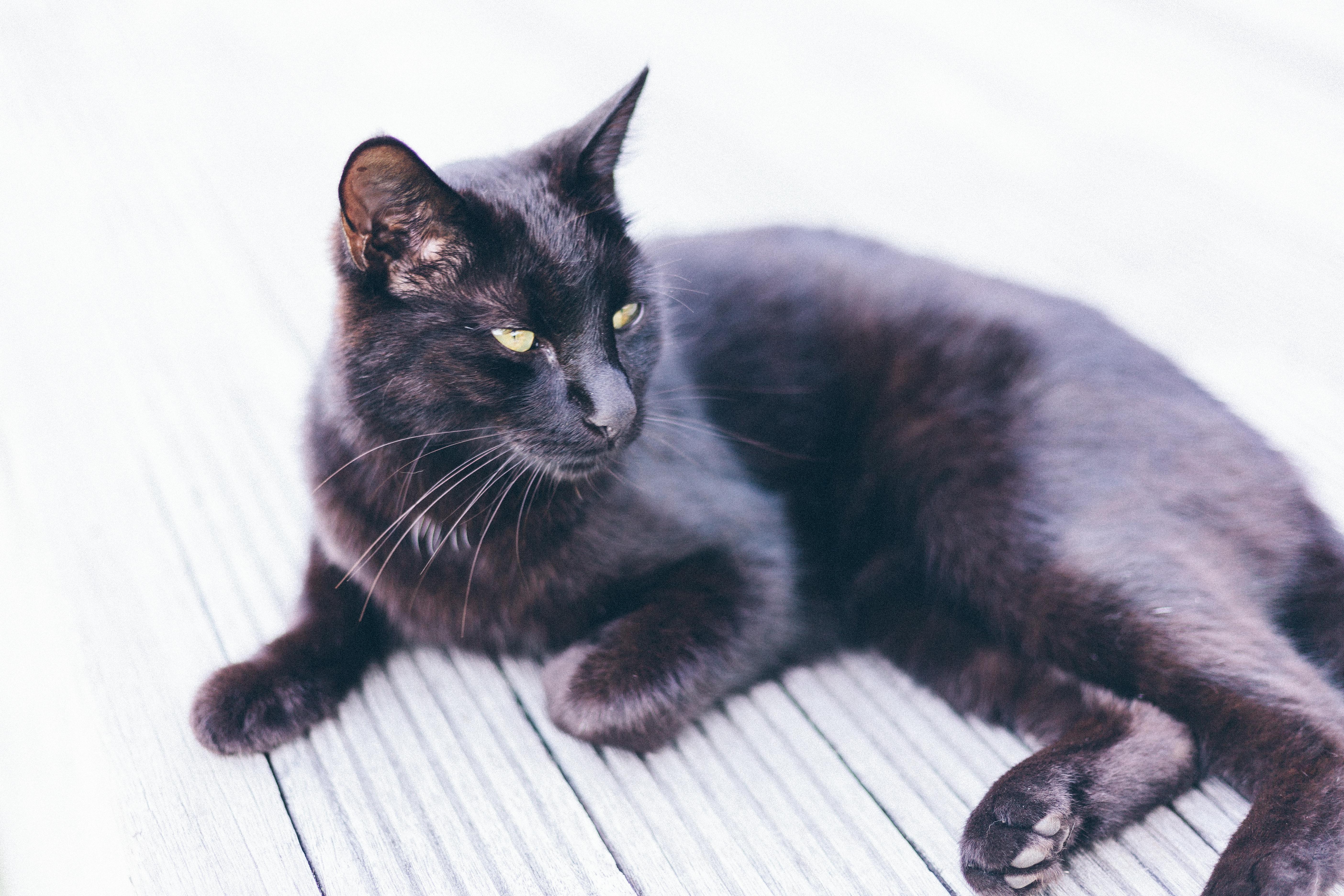 Black Cat on the Deck, Cat, Green, Pet, HQ Photo