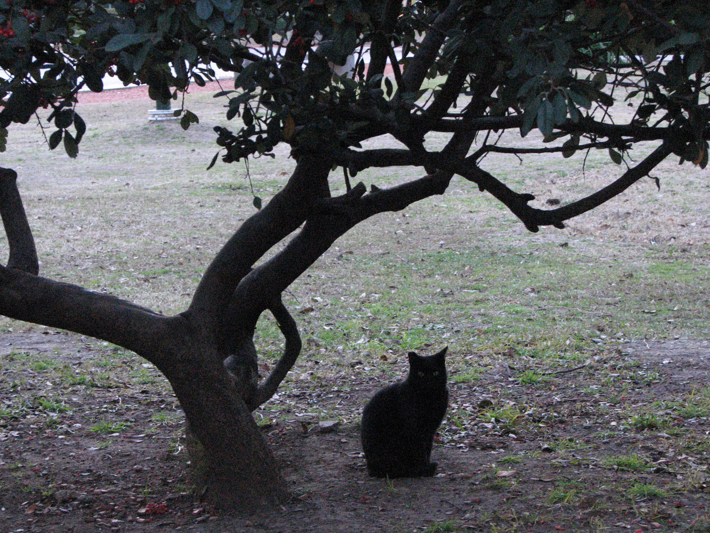 Black cat under a tree photo