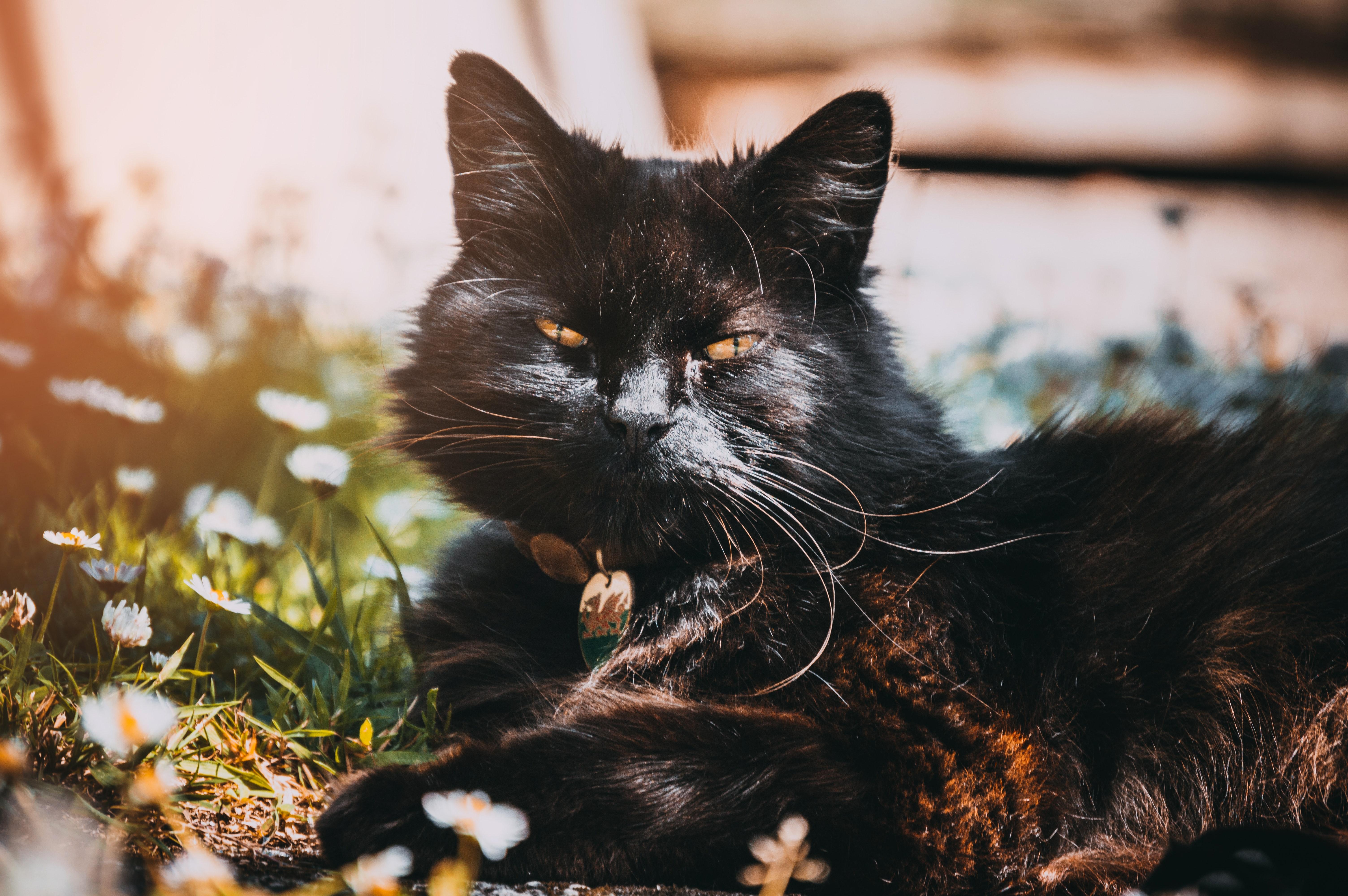 Black cat under sunny sky photo