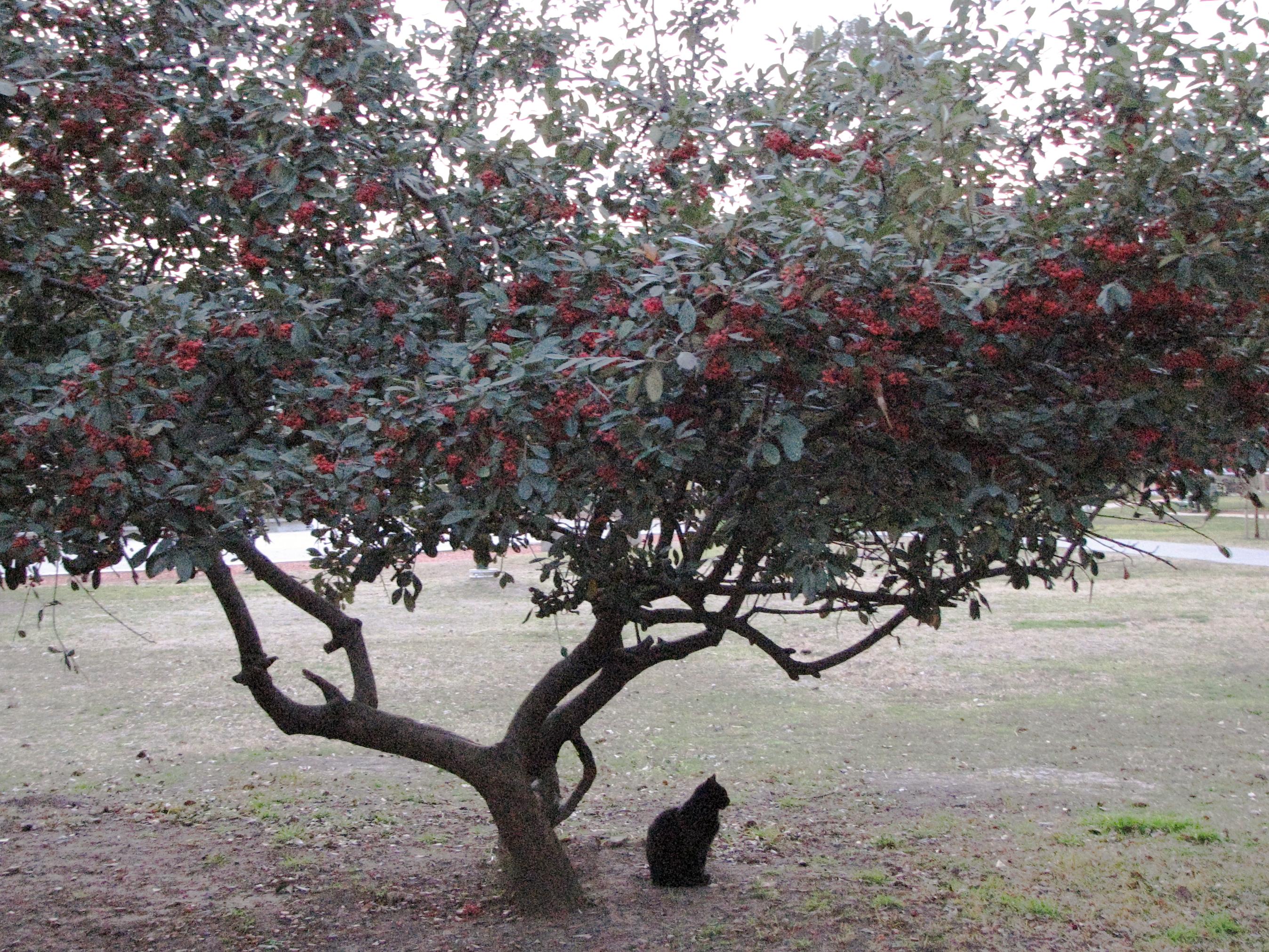 Black cat under tree photo