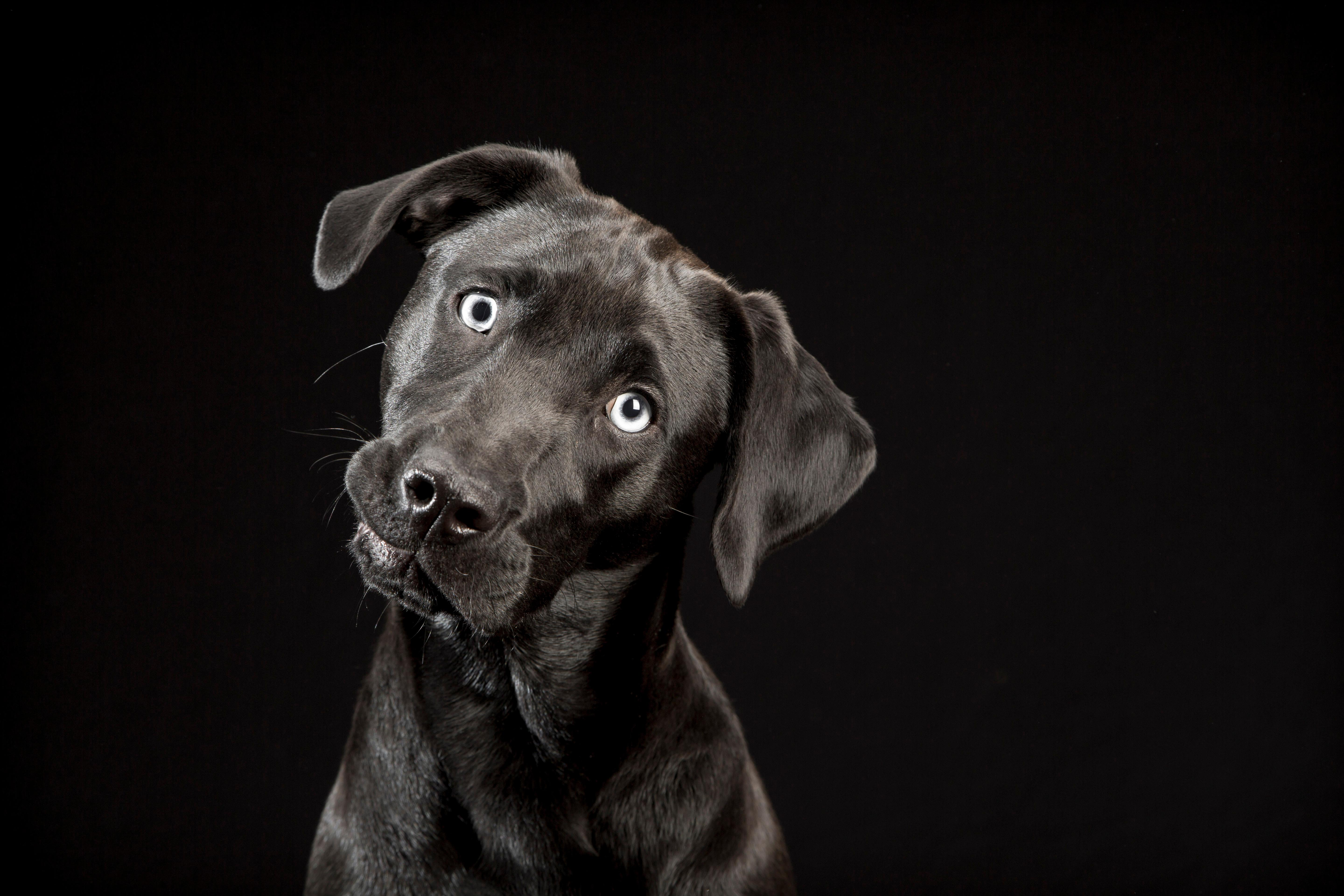 Amazon.com: The Black Dogs Project: Extraordinary Black Dogs and Why ...