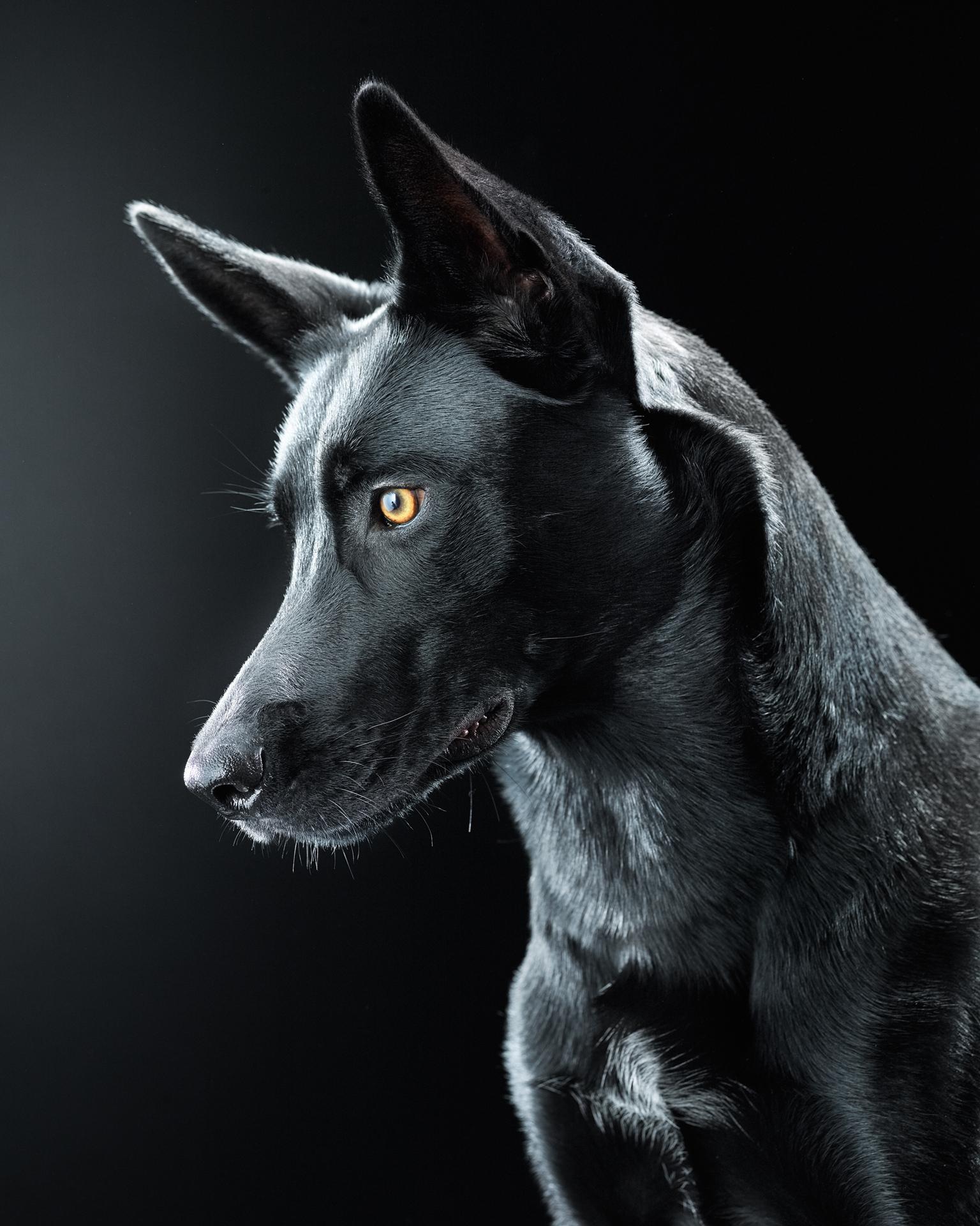 Dylan Collard › Black Dog Project