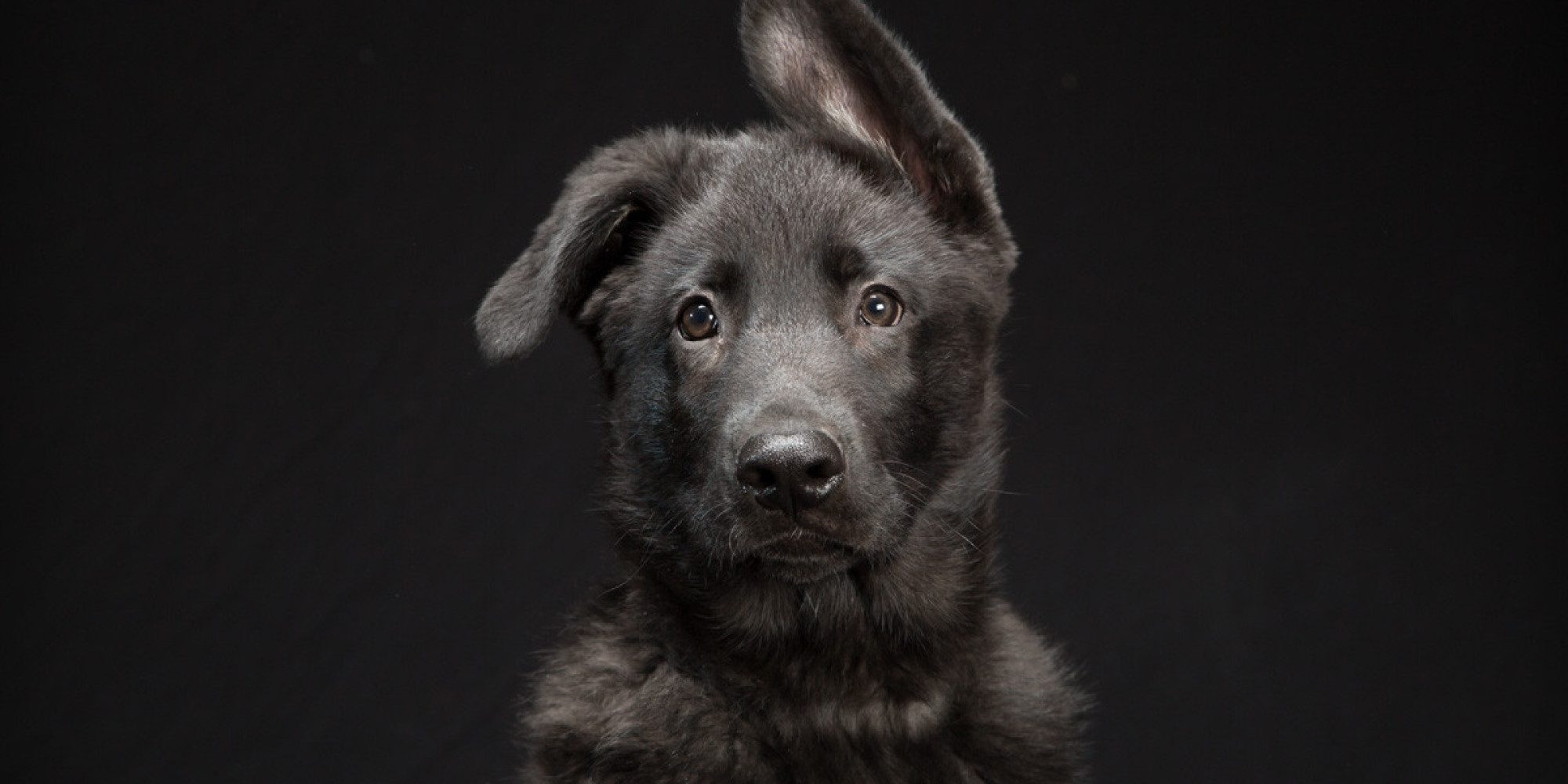 Stunning Photo Series Highlights The Beauty Of Black Dogs That Are ...