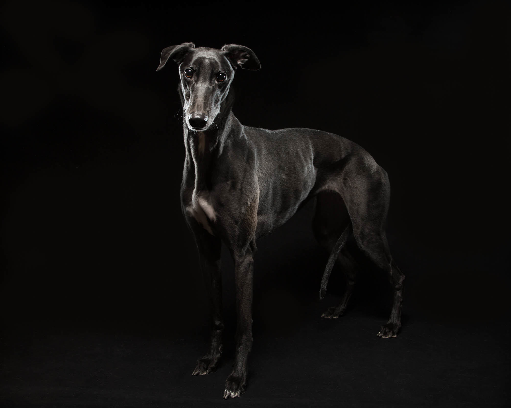 Fred Levy - Photographer | New Blog for Black Dogs Project - Fred ...