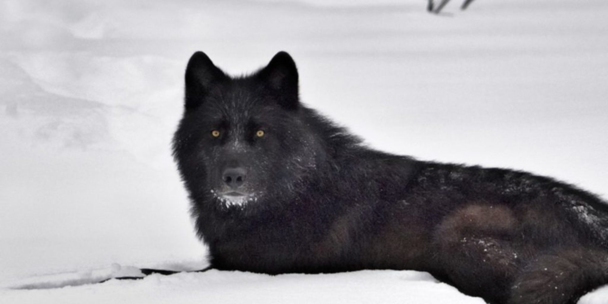 The Black Dog Legend, The Haunted, Beasts & Legends,