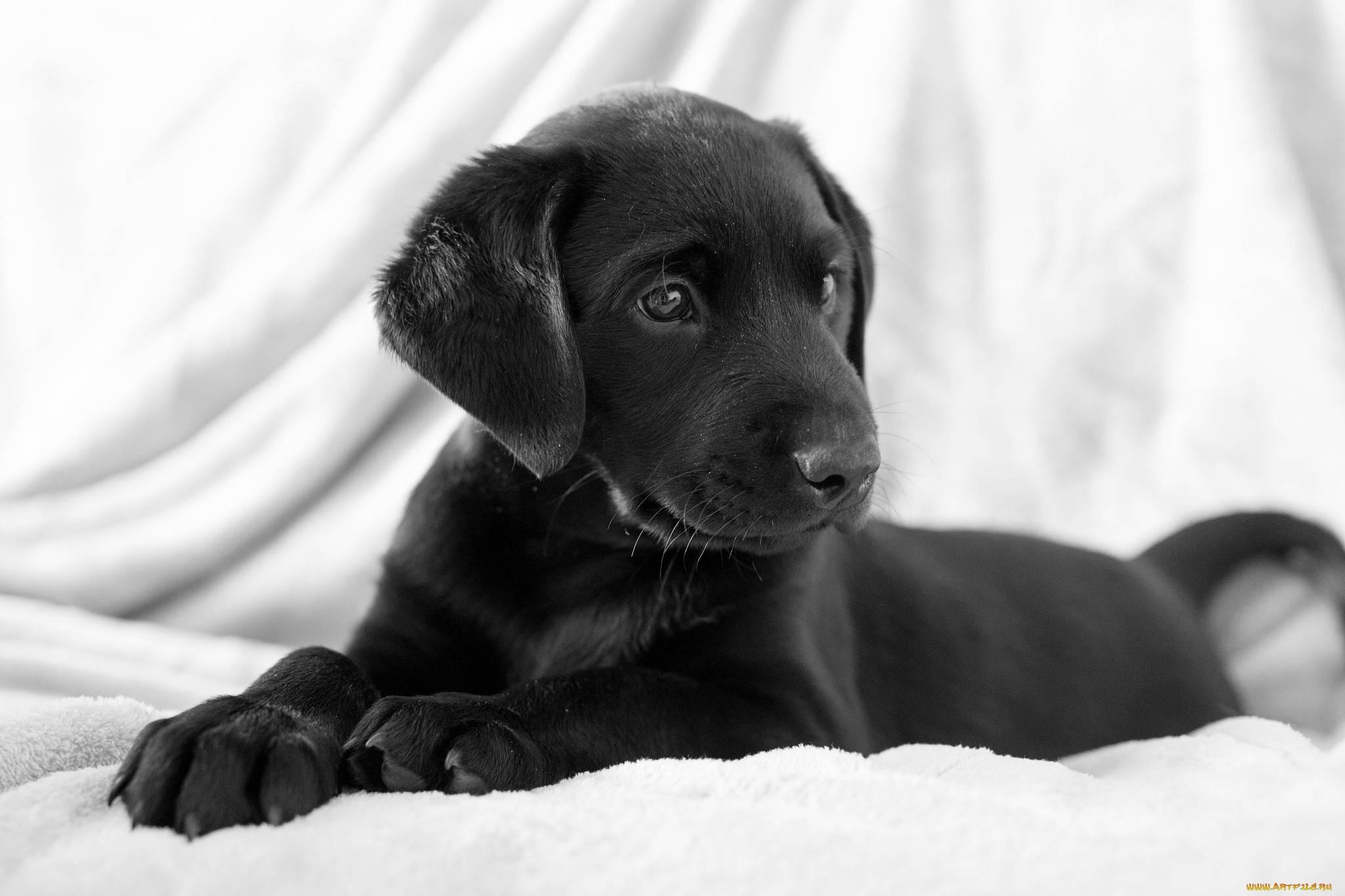 460798-dogs-black-dog | PetLife West Palm Beach
