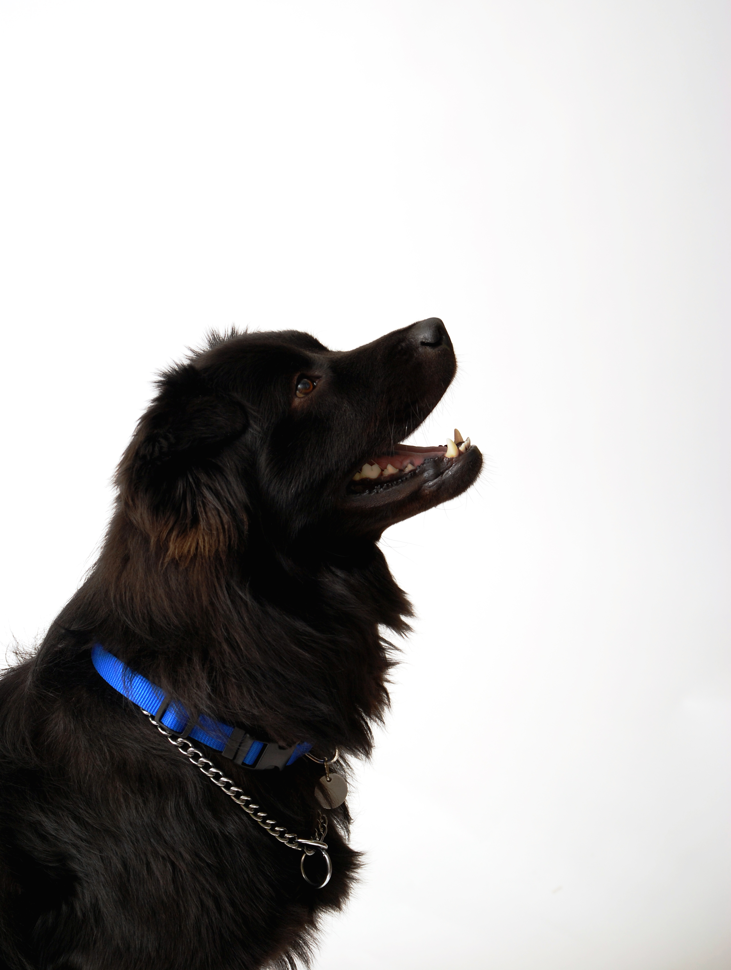 Black dog, Animal, Black, Dog, Free dog photos, HQ Photo